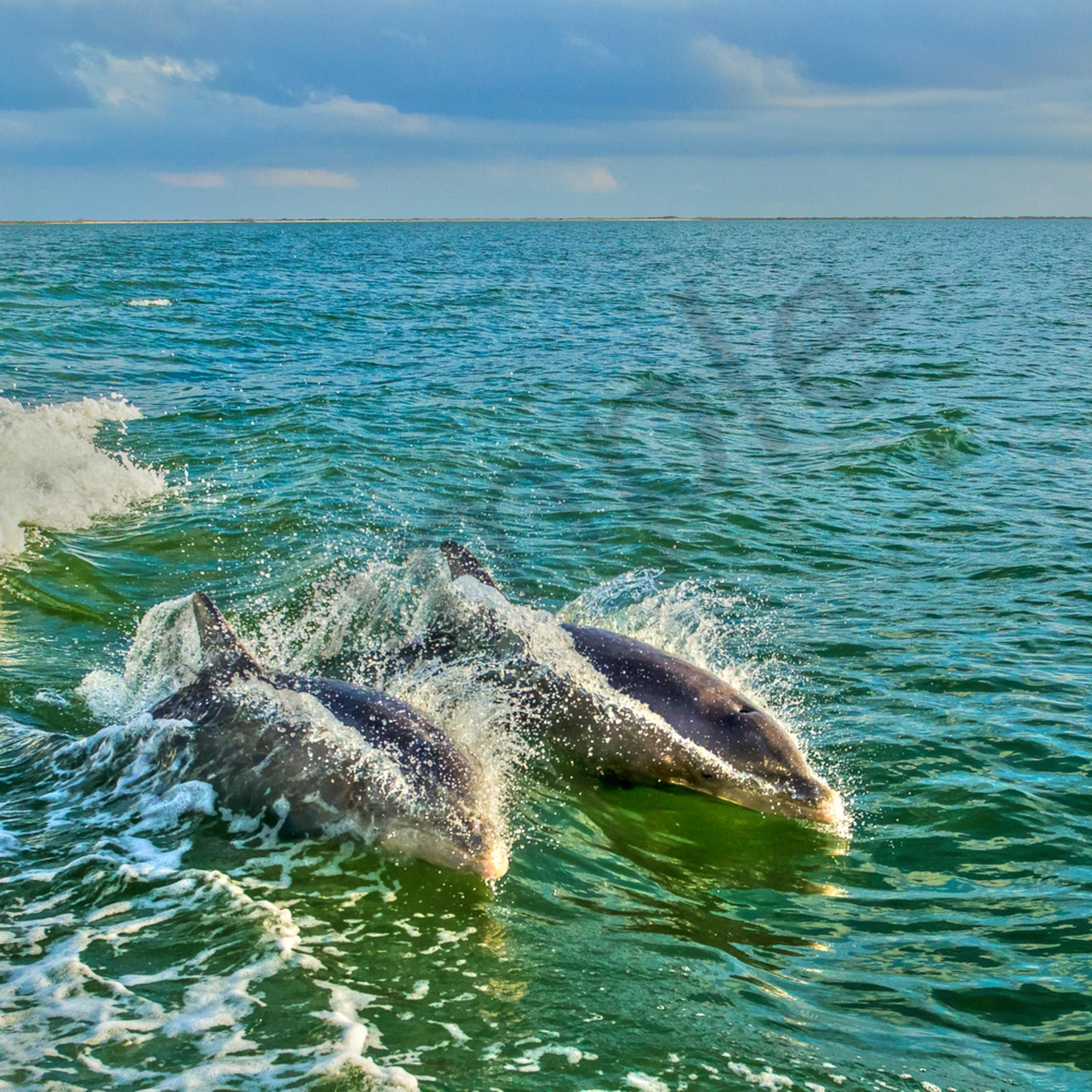 Dolphin duo jo1whe
