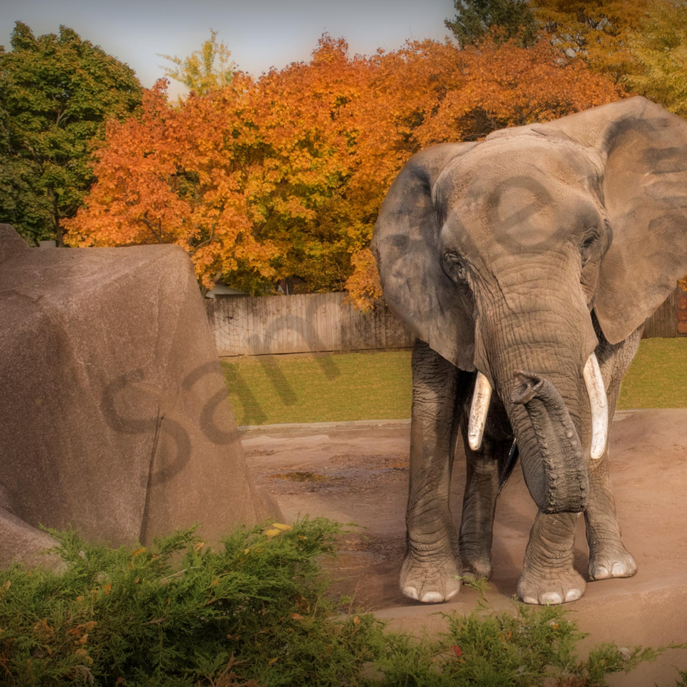 Elephant fall final leecvj