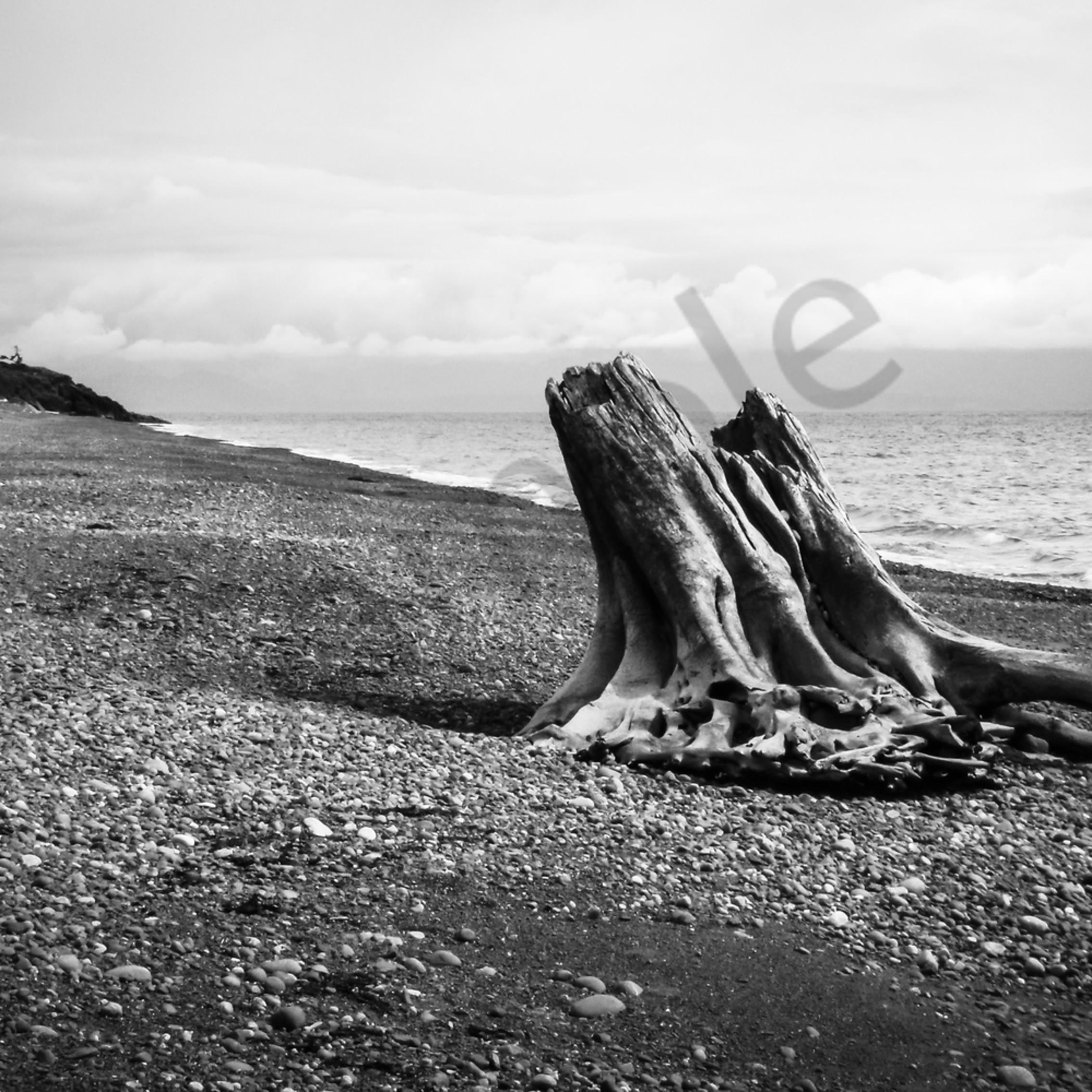 Driftwood on a pebbled beach lpfe2y