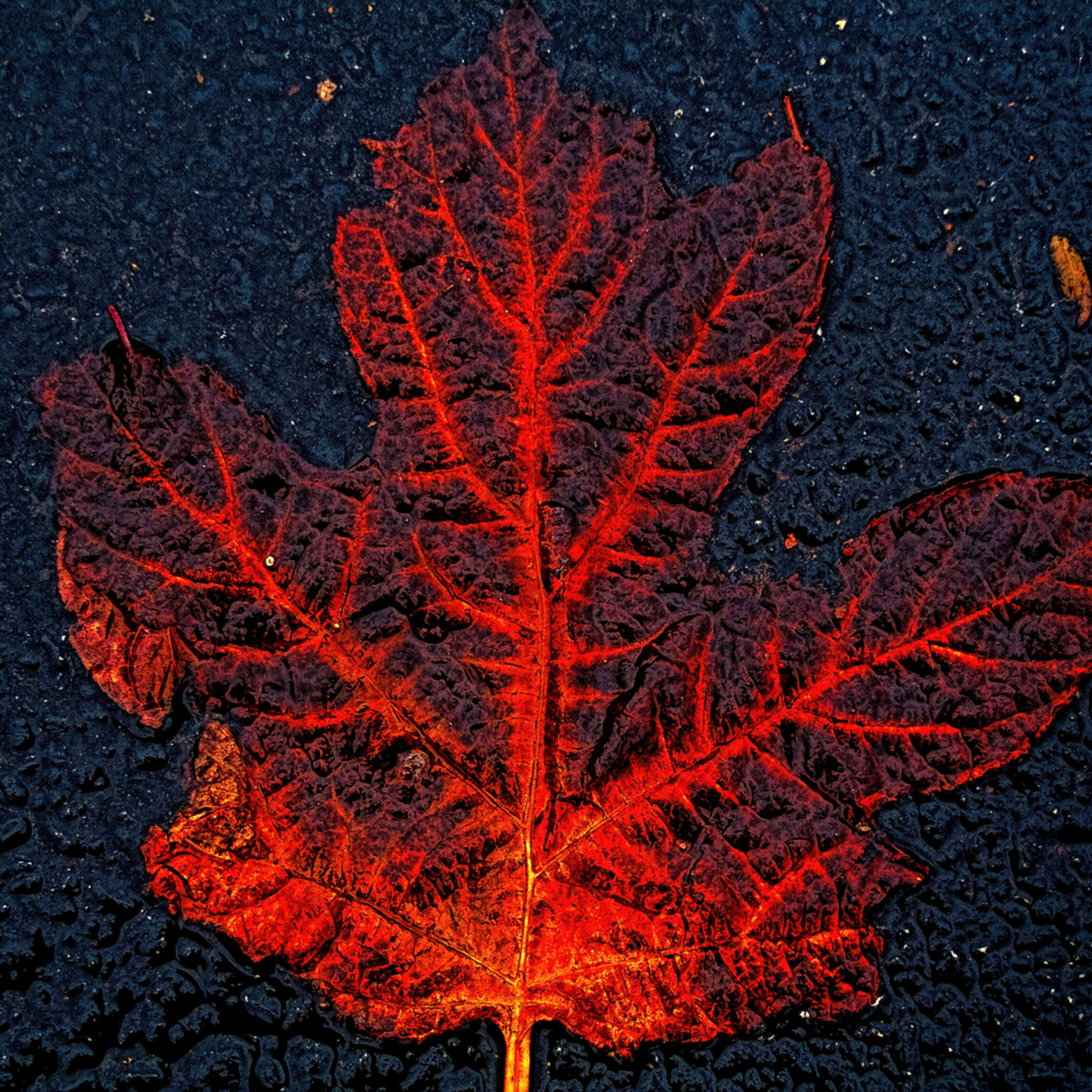 Decaying leaf on pavement ybnisk