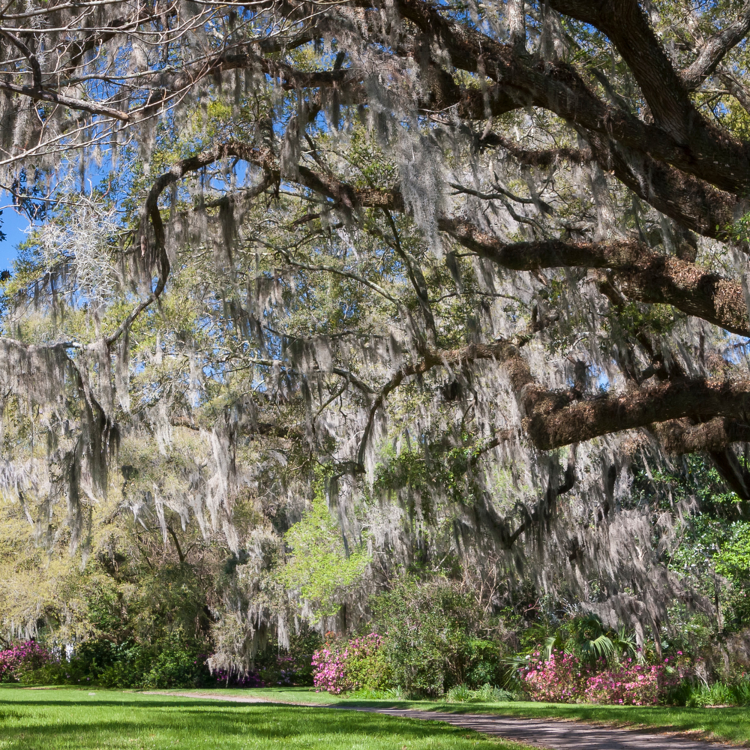 Garden path under live oak gcecds