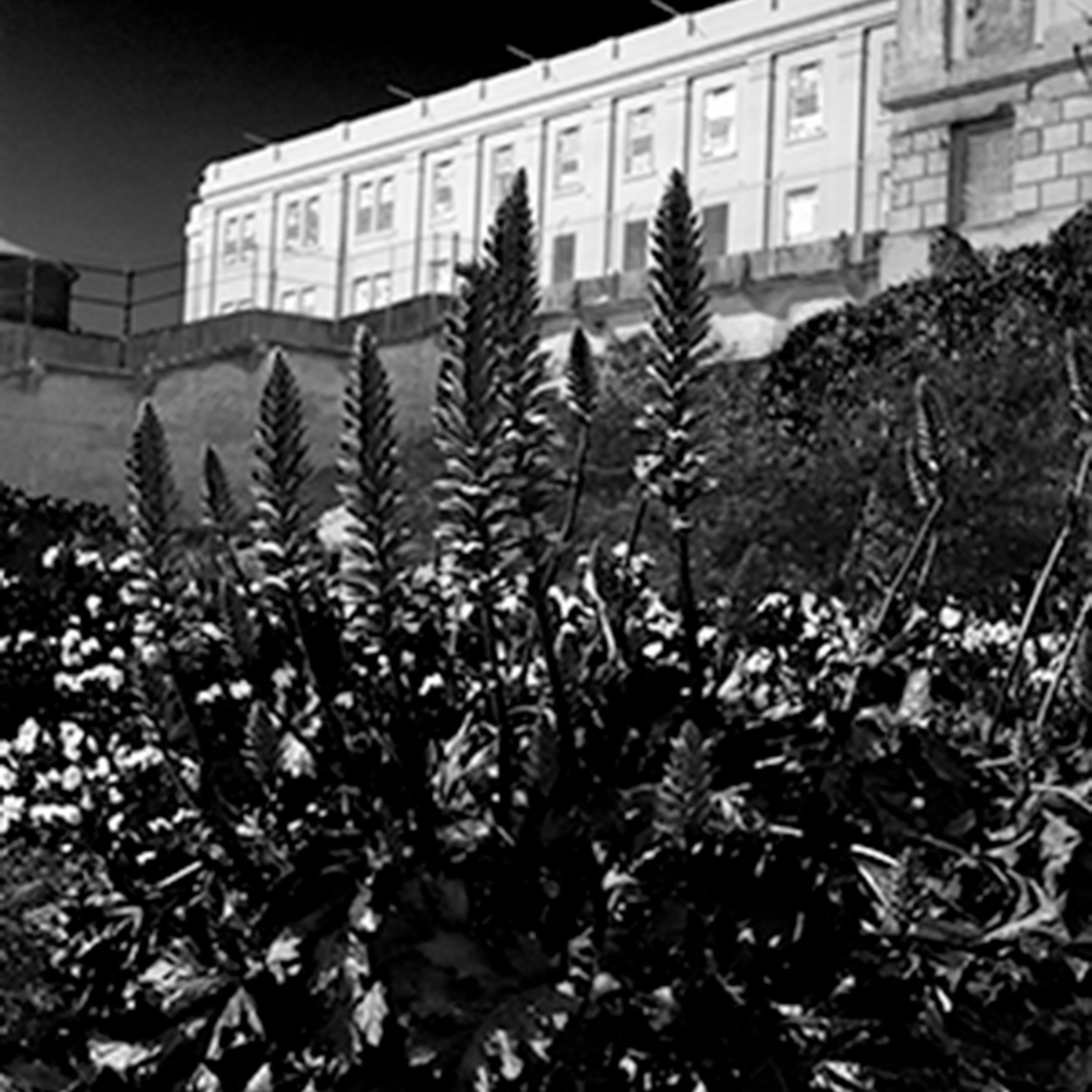 Alcatraz larrain ungukq
