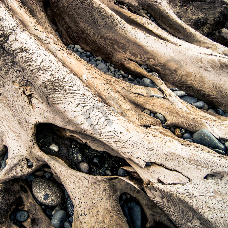 Driftwood srdqib