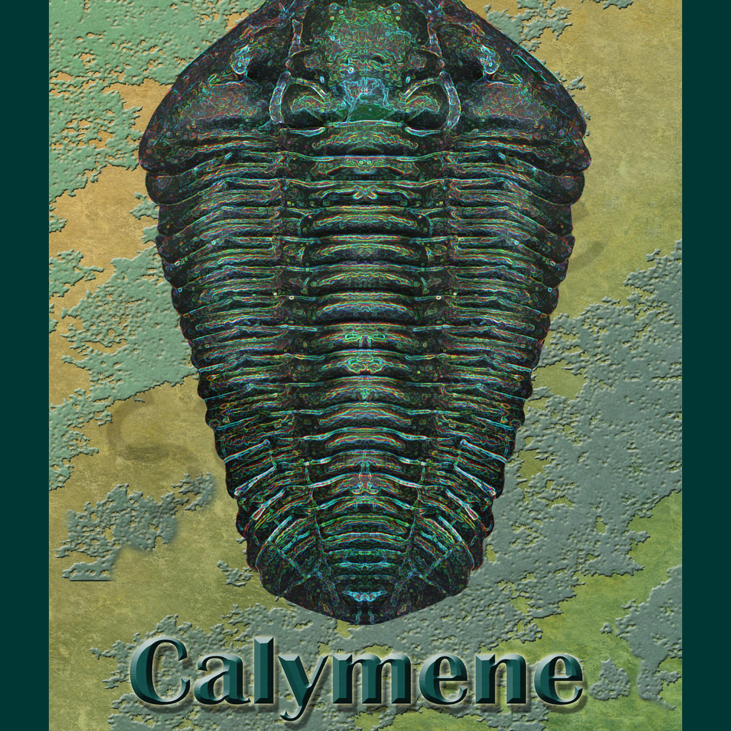 Calymene 8.5 x 11 nxowpo