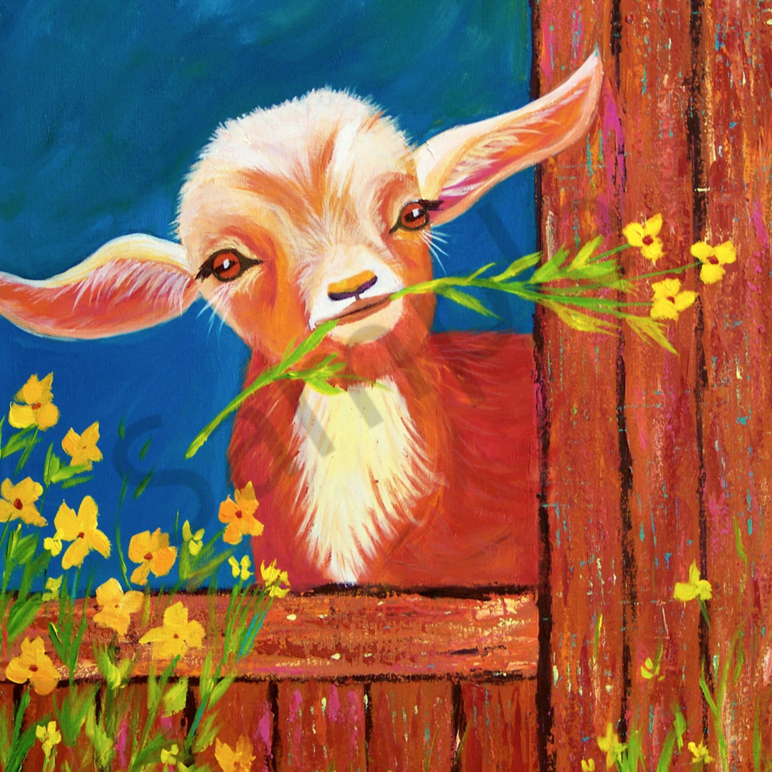 Happy little goat fddzzb