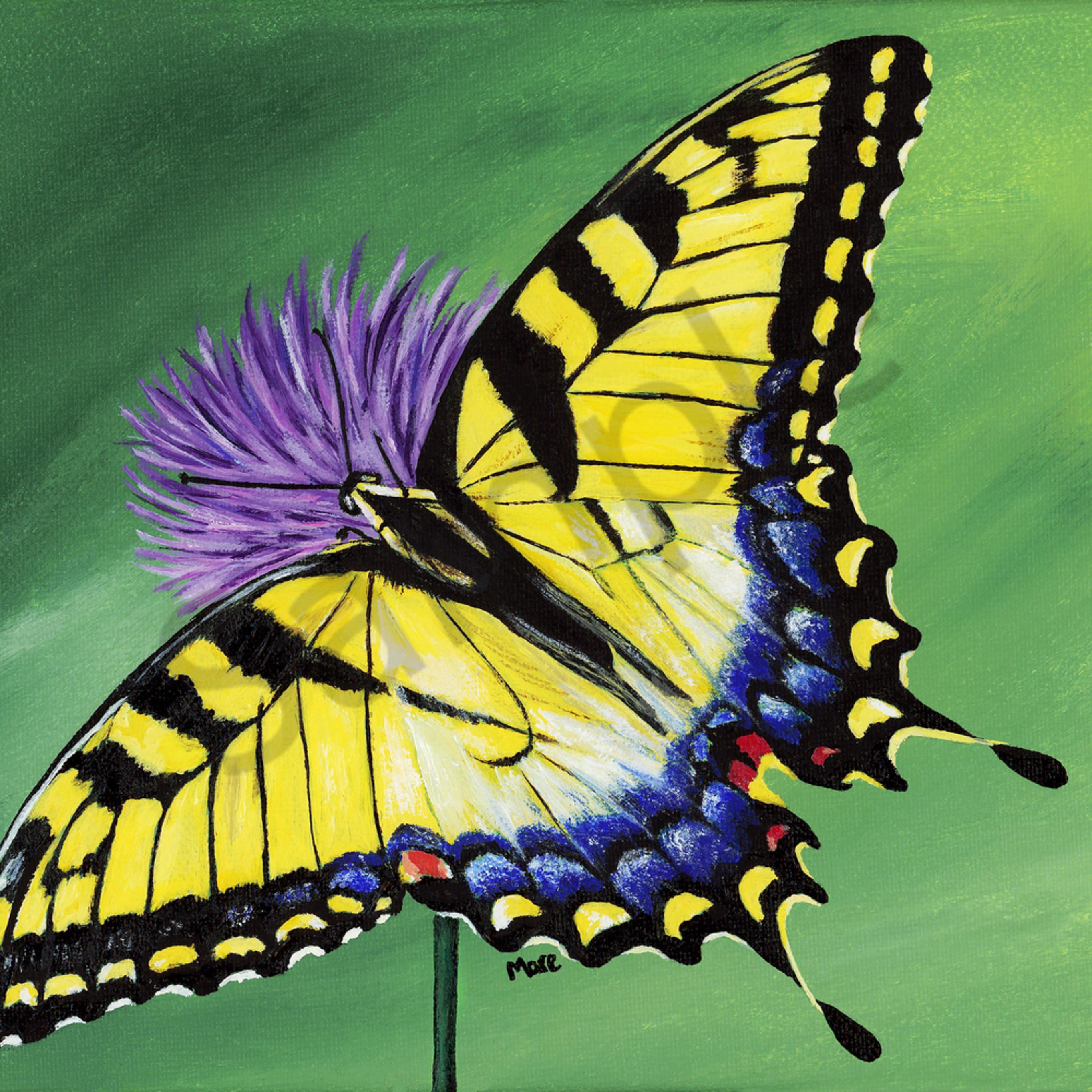Tiger swallowtail 8x10 trkqy7
