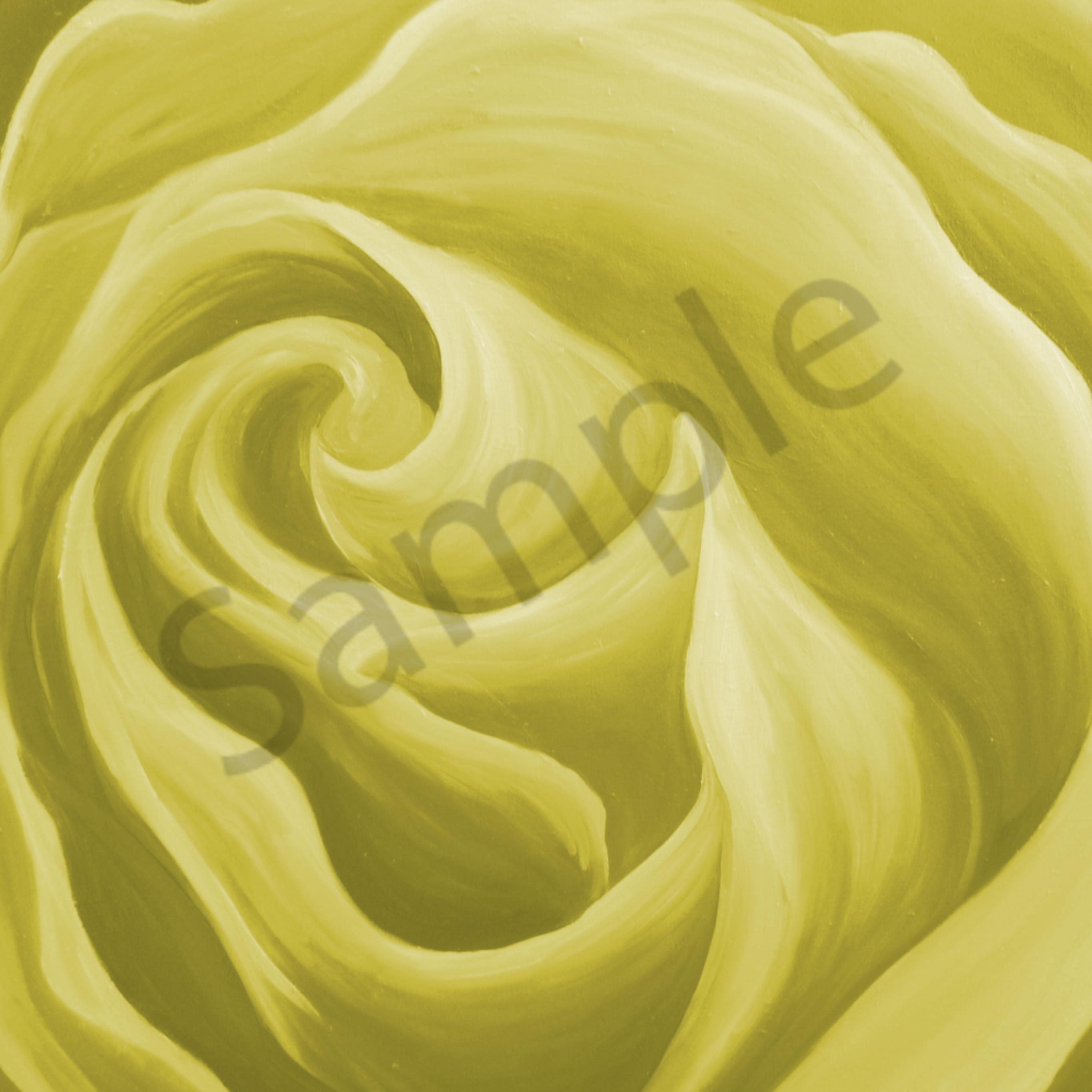 Light yellow rose k8jvou