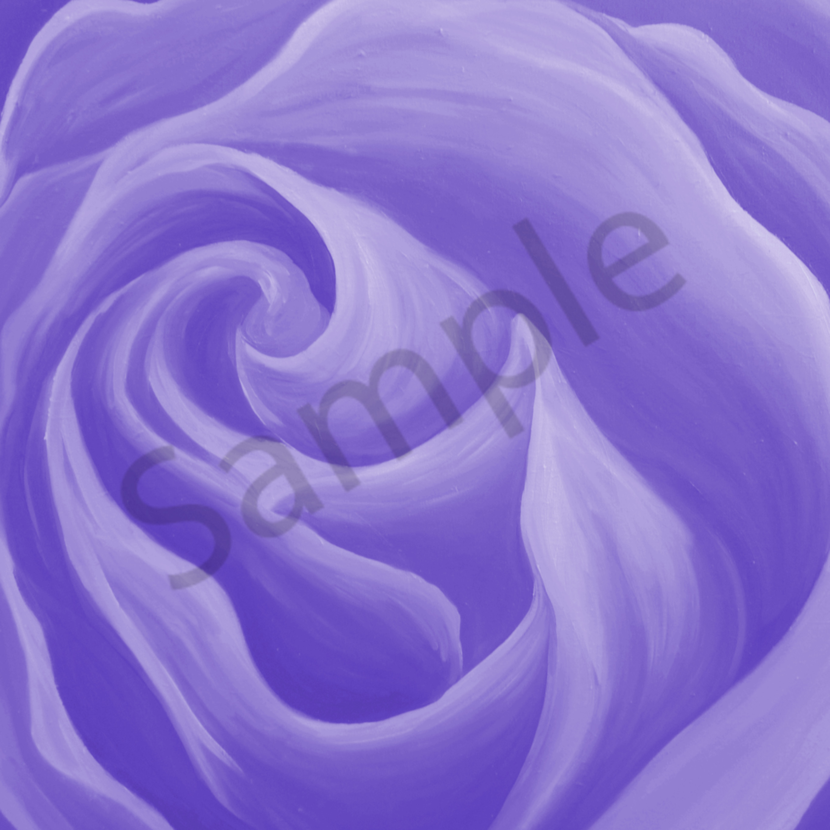 Light new purple rose v53djw