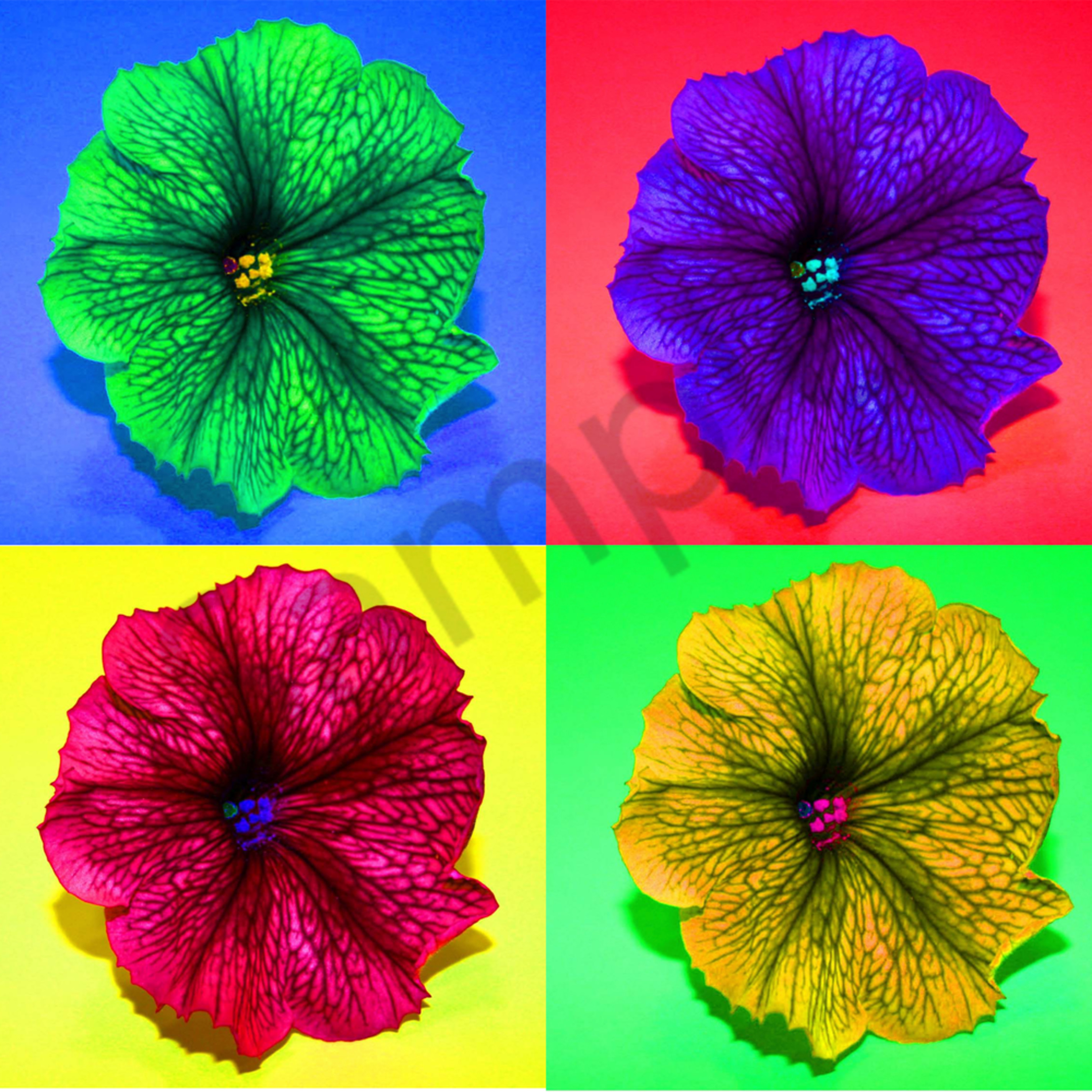 Four flowers3 nhzqu2