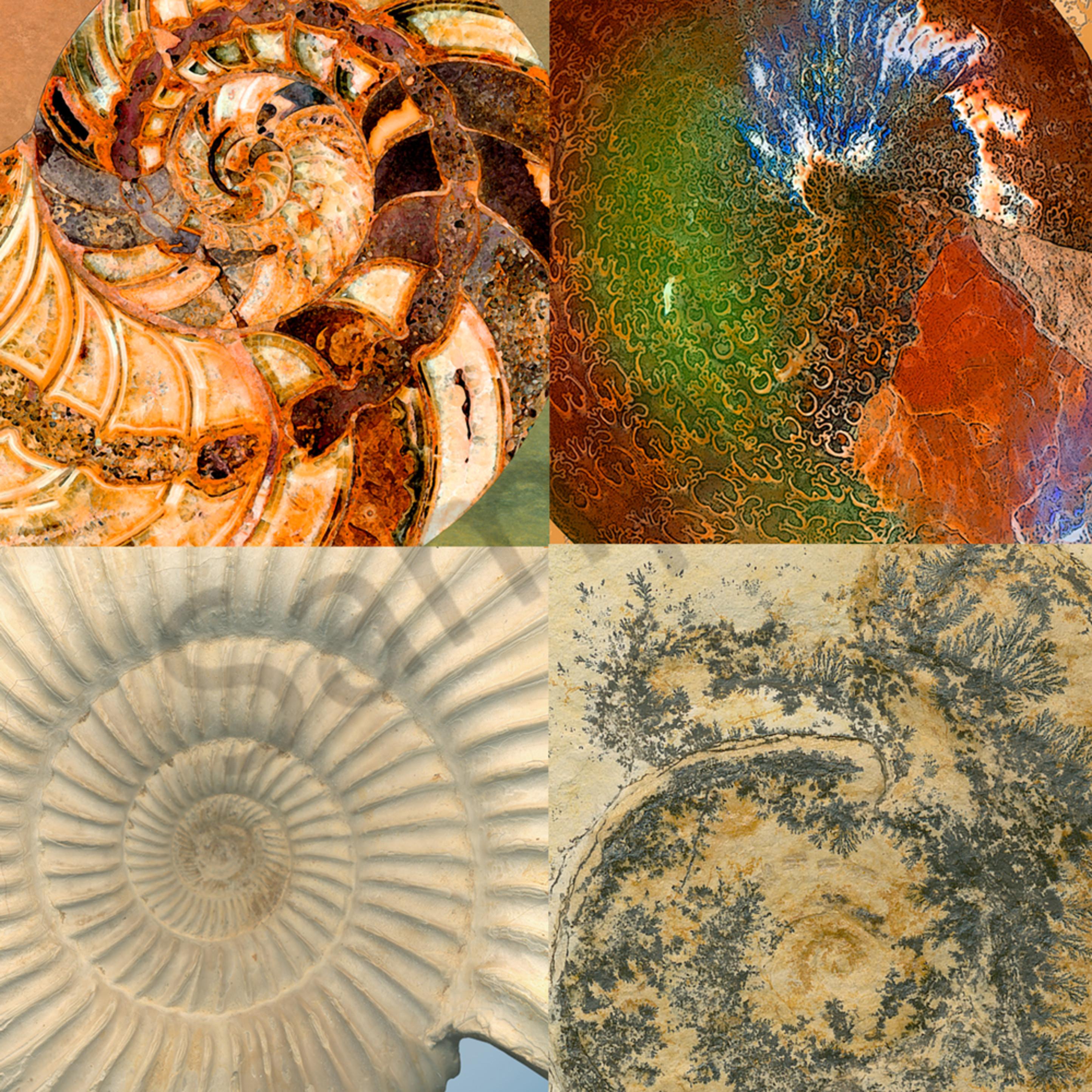 Four fossil ammonite detail u4qcws