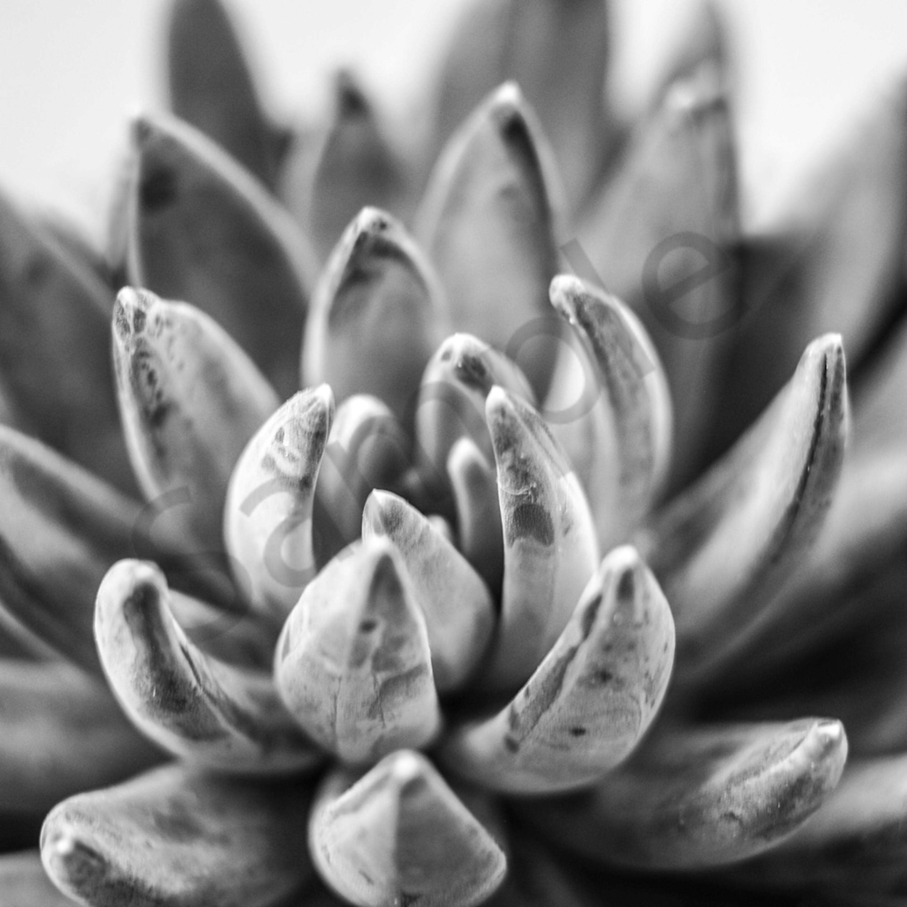 Succulent cactus detail horizontal desert arid palm springs potted eco friendly drought tolerant garden variety cwb7jx