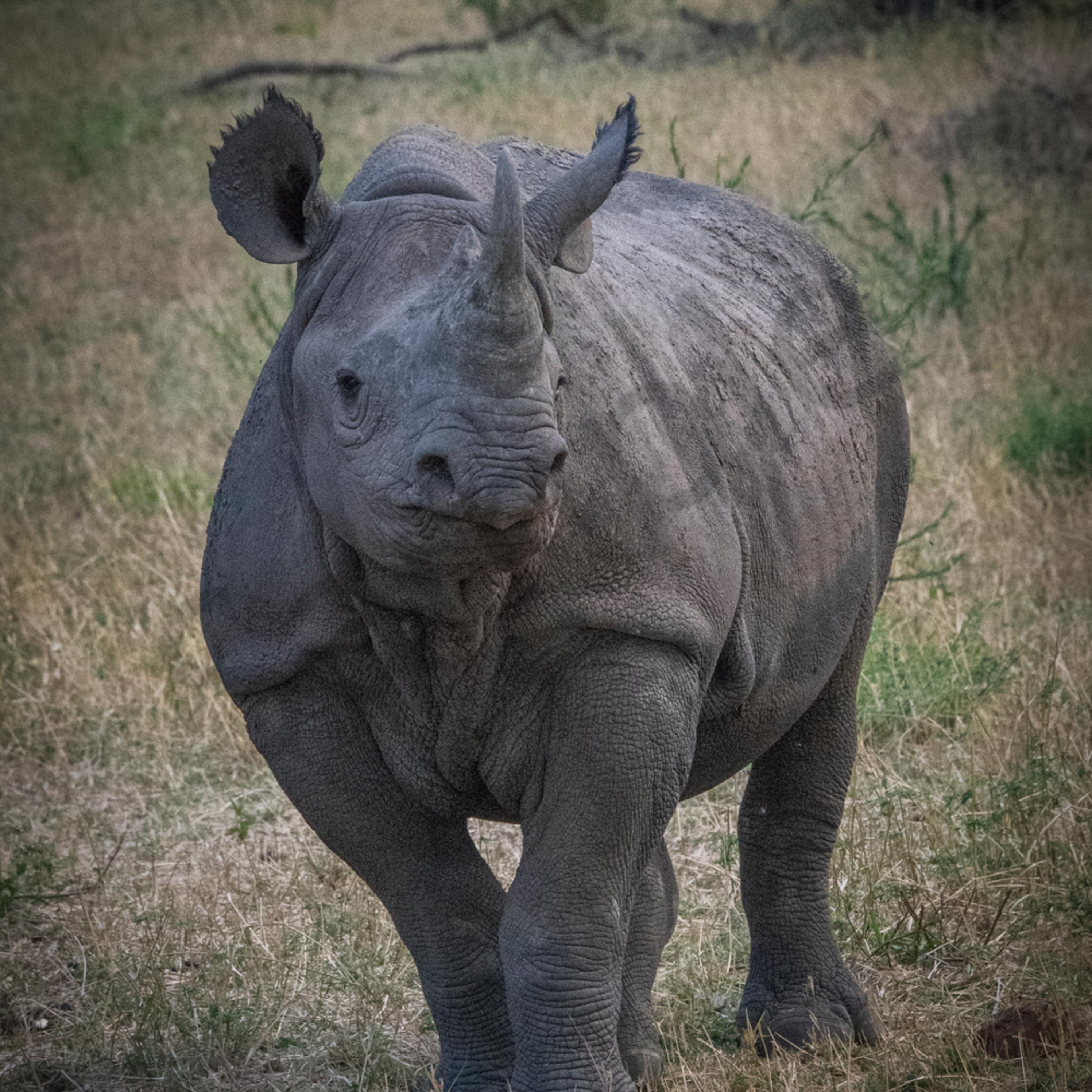 Jps rhino 1 pmrgbk