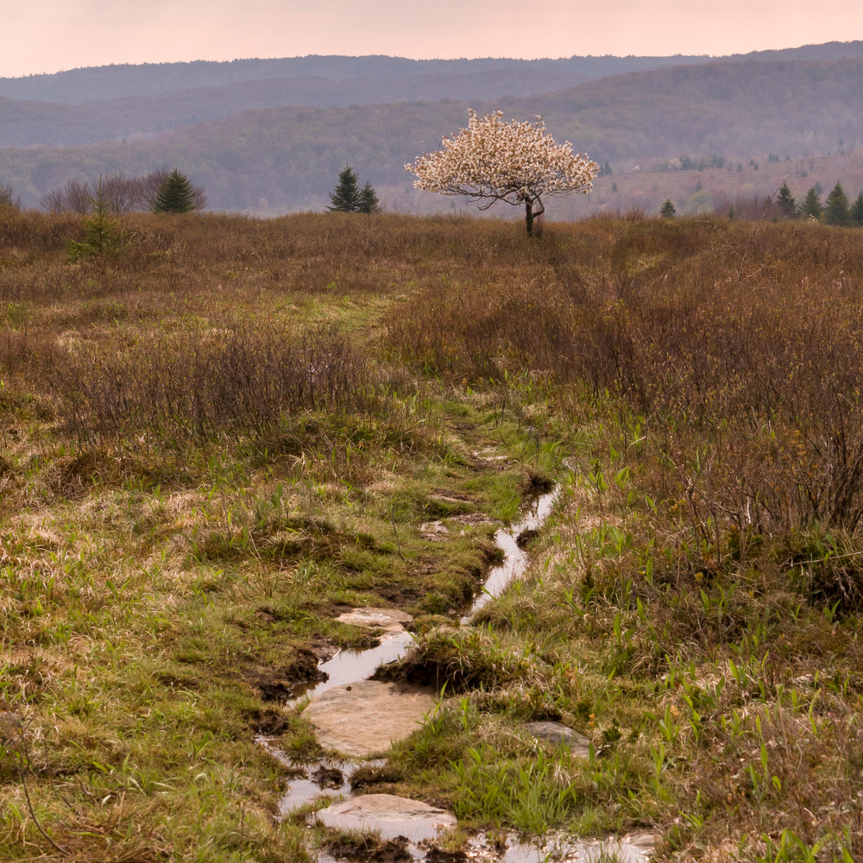 Lone tree hill c llbxm1