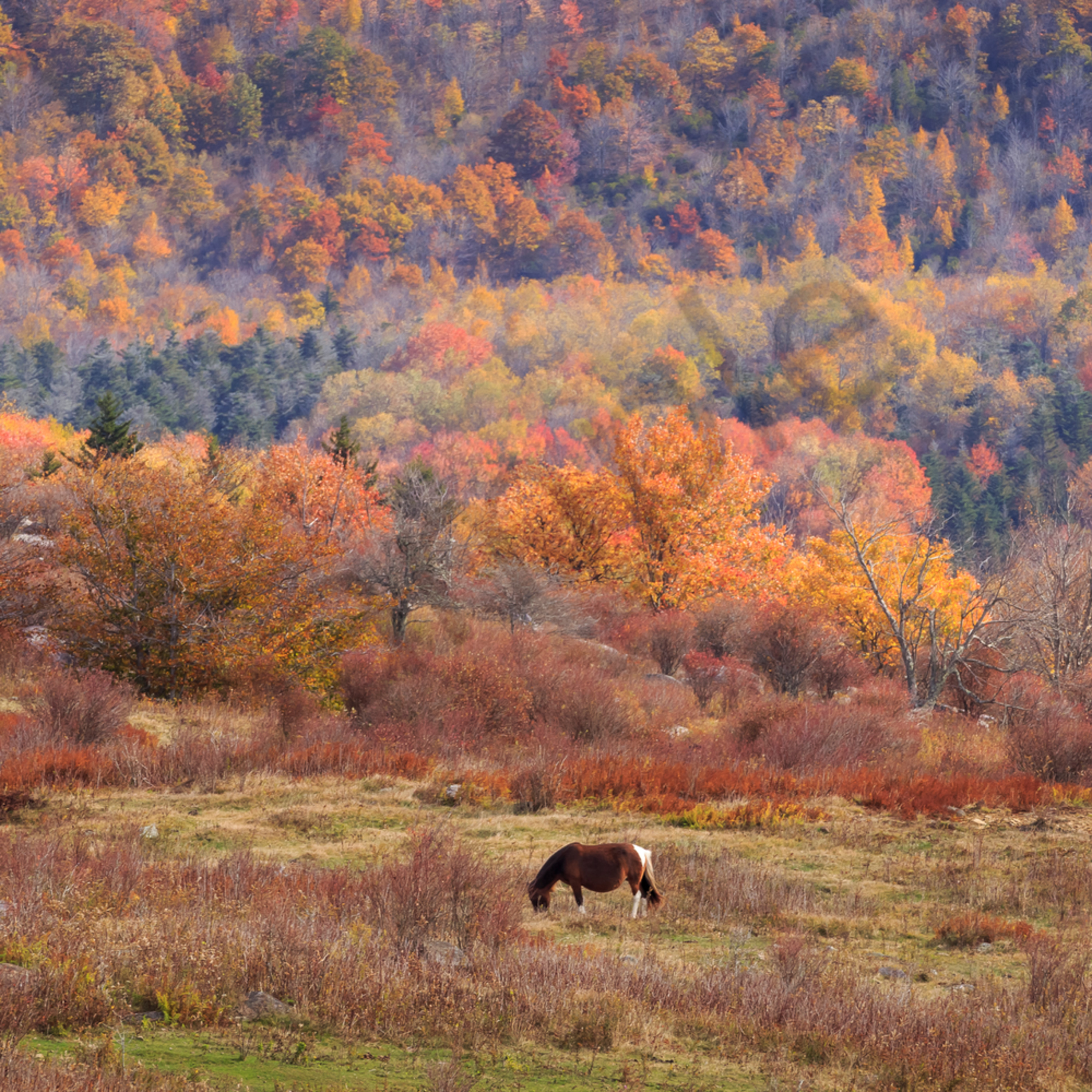 Grazing on colorful mountain urb7up