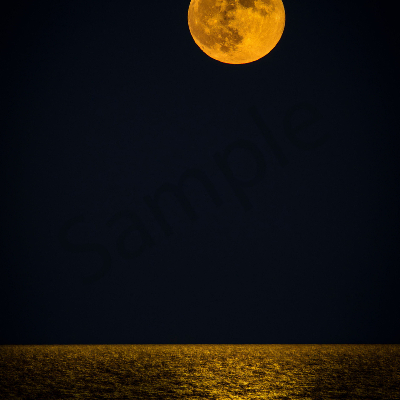 Harvest moon t1ngzf