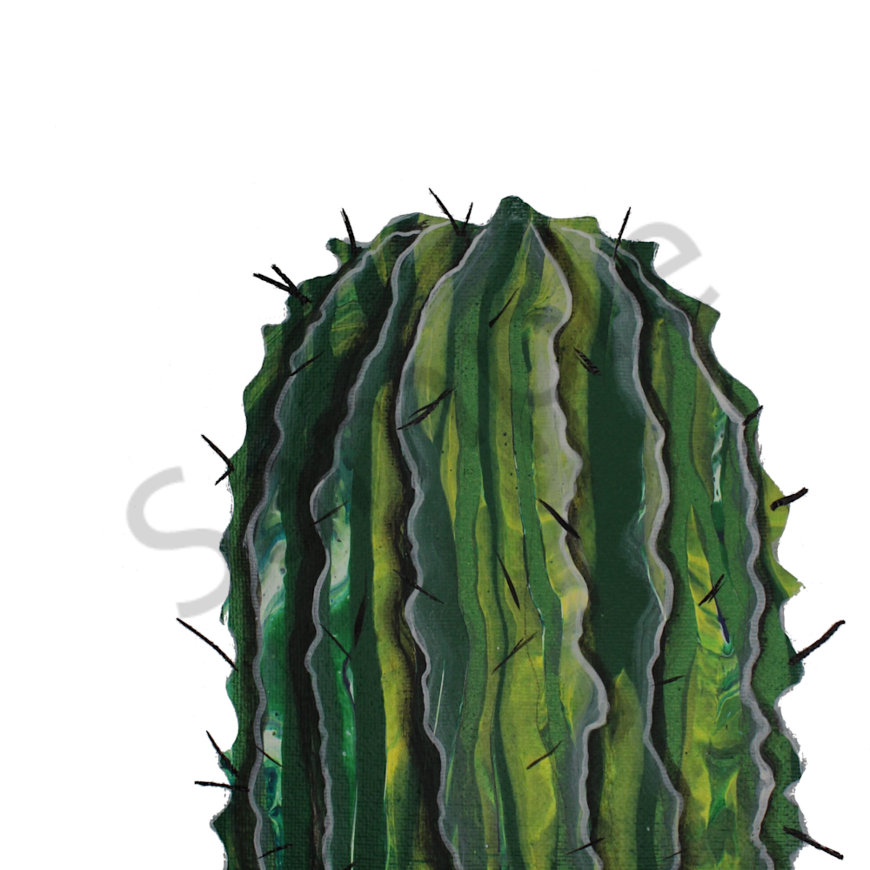 Whitecactus bvw84f