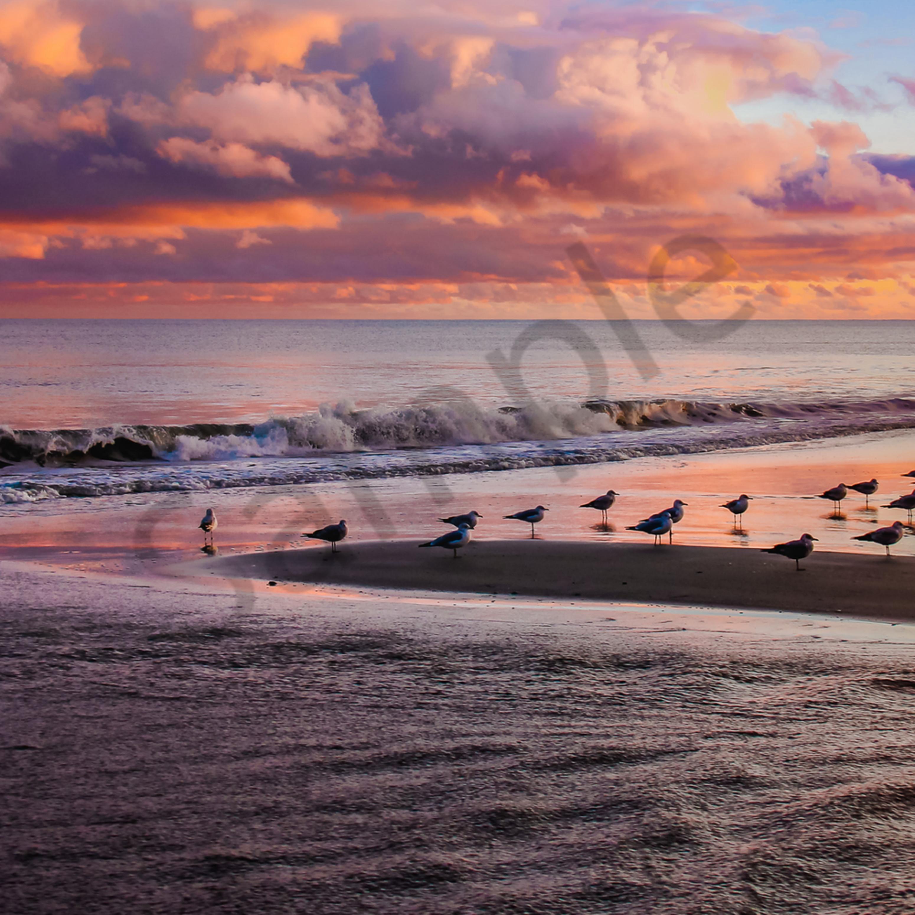 Sunset gulls 2 kkudxo