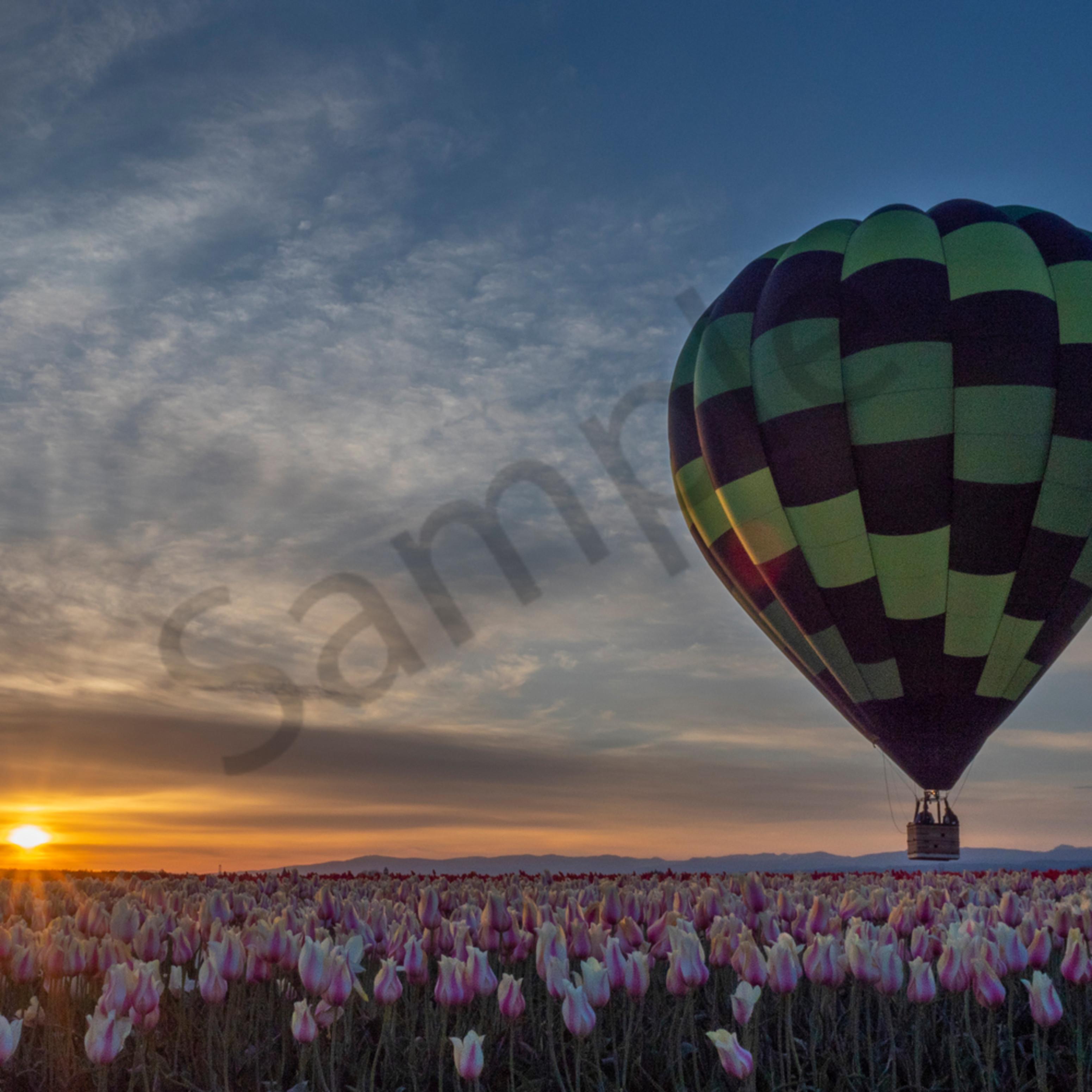 Tulip hot air balloon sunrise w final sig dwemz4