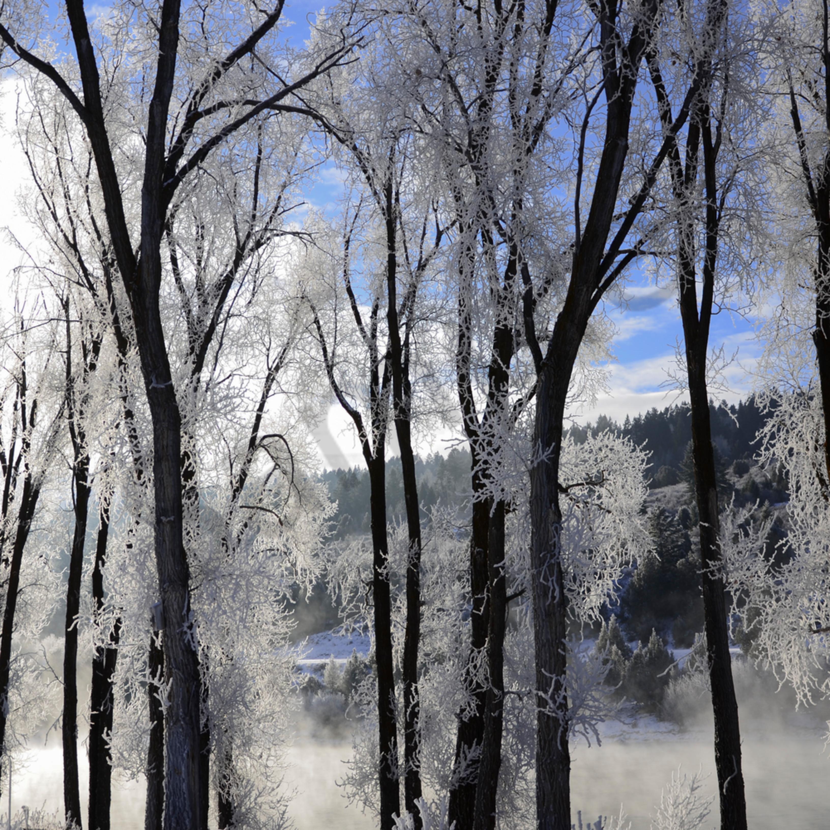 Frosty morning 3657 d6pbua