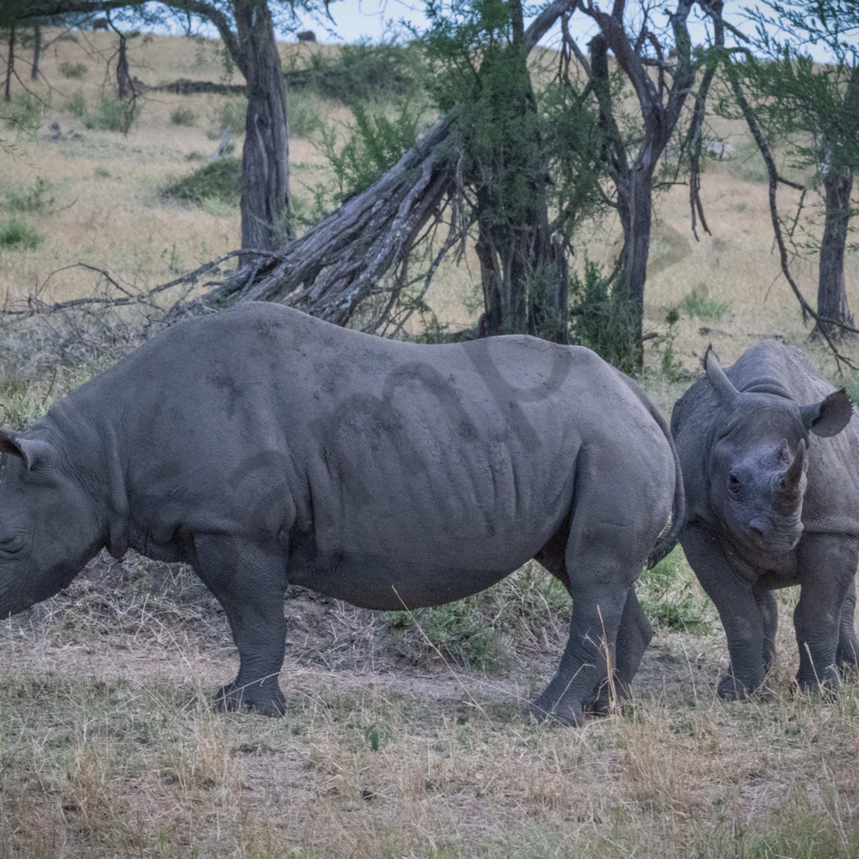 Jps black rhinos wdr4qu