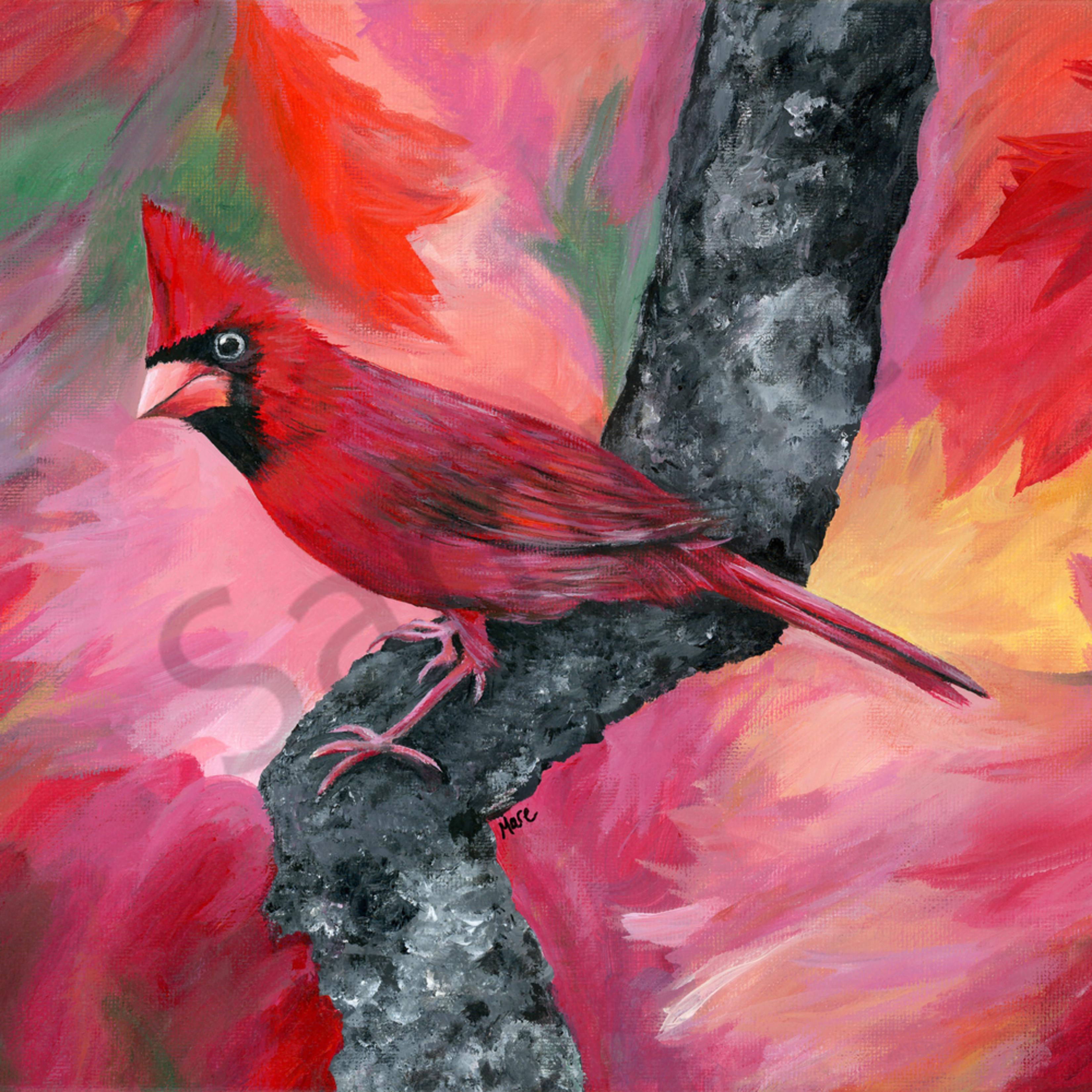 Cardinal 300 nferbc