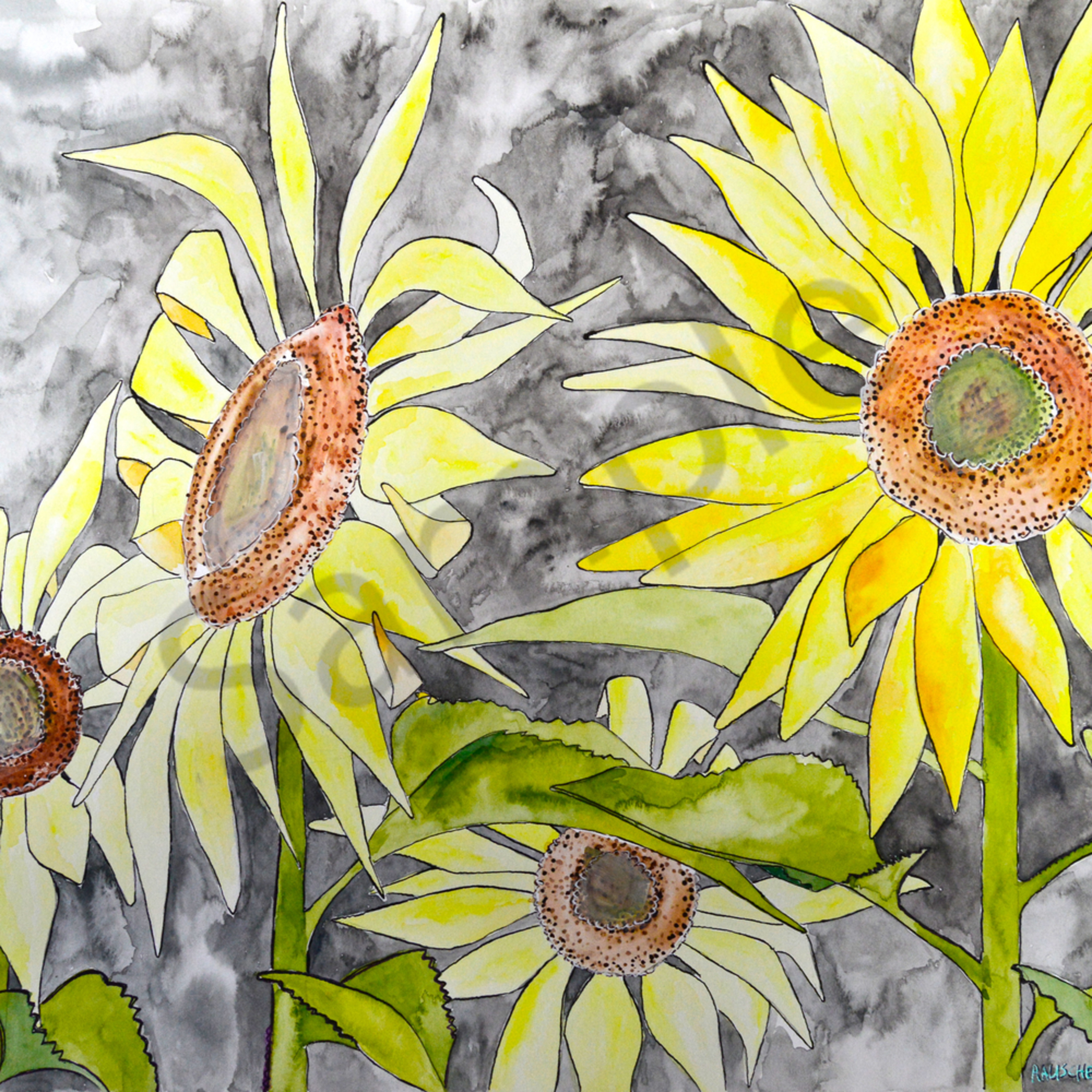 Sunflower1 muhlni