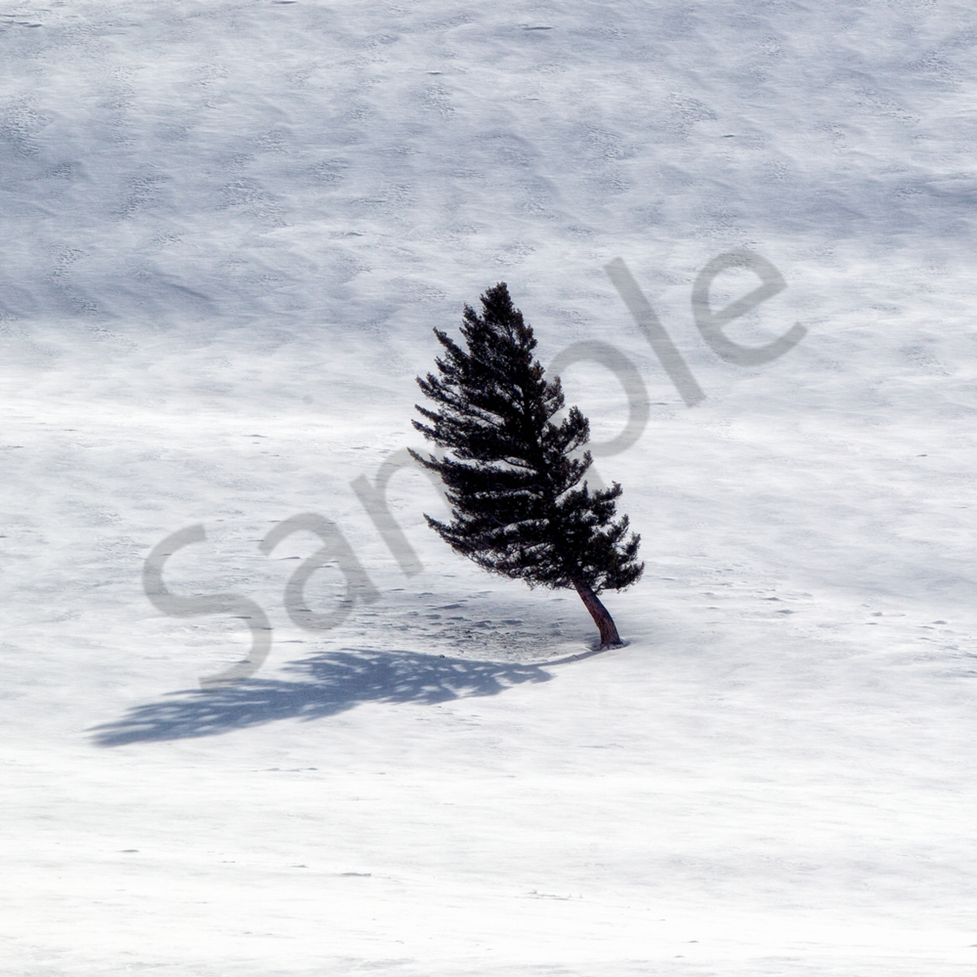 Onetree lpnvy3