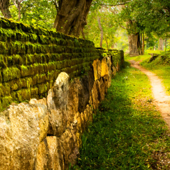 Old path moss bricks pano rooszf