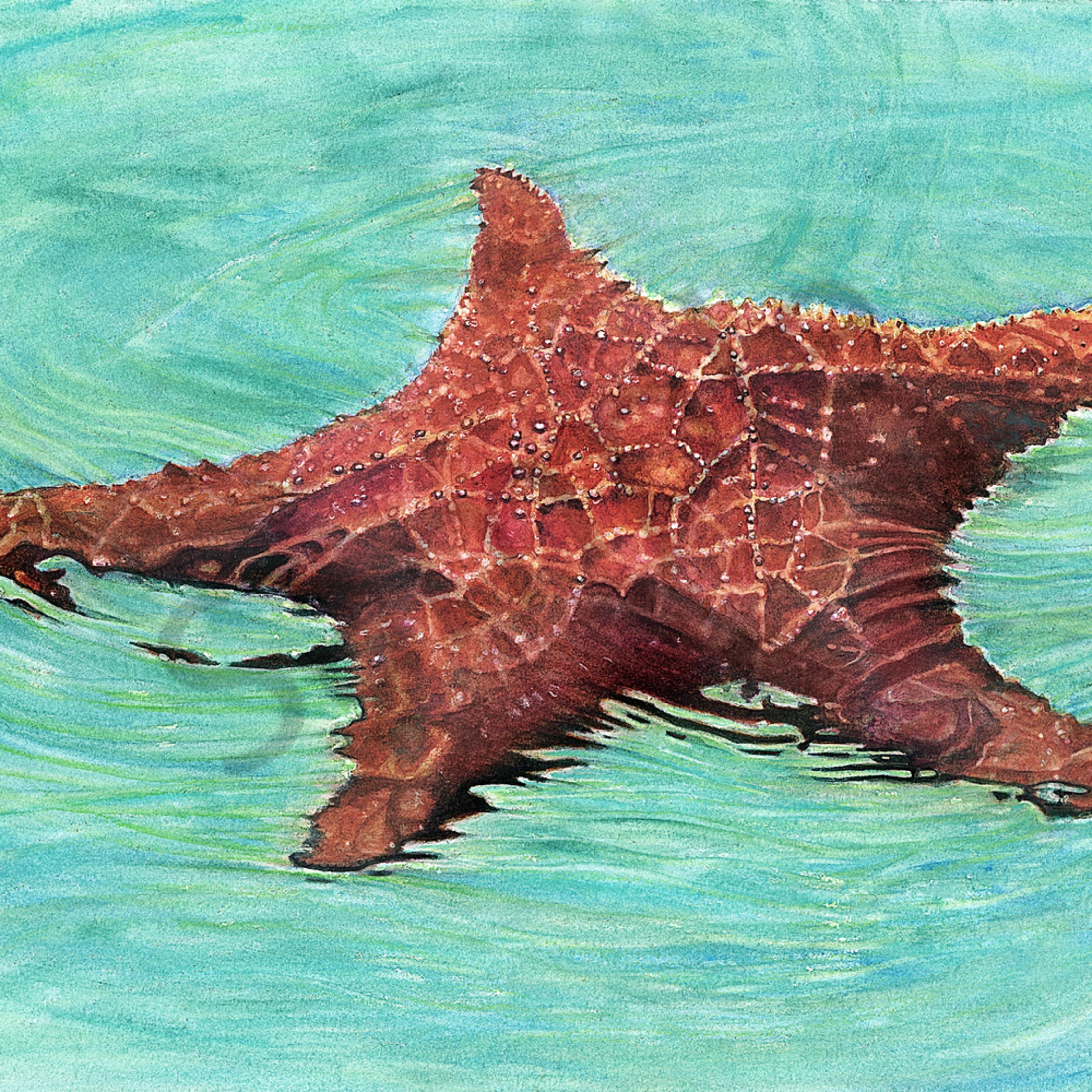 Sea star 1 ebrsck