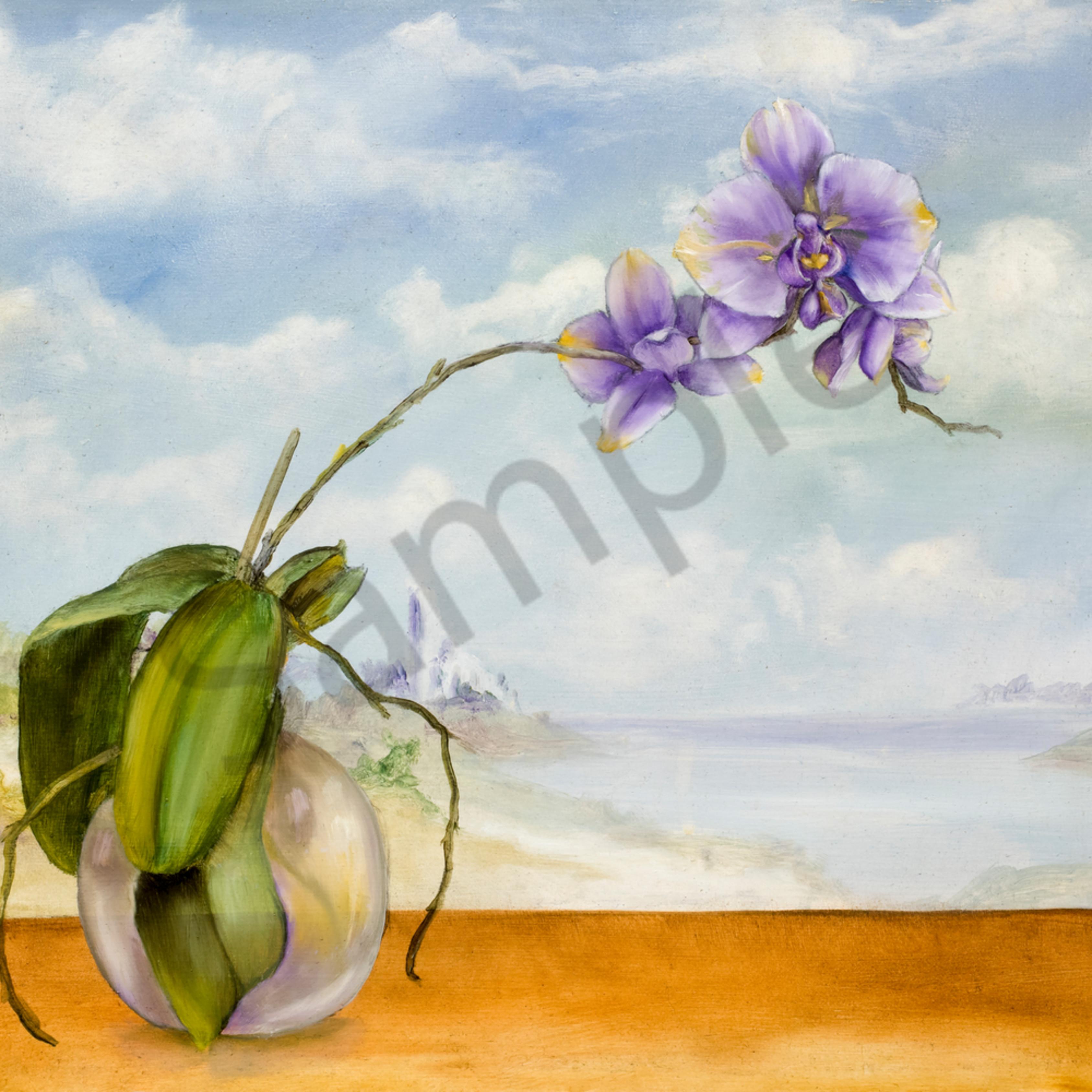 Orchid katazg
