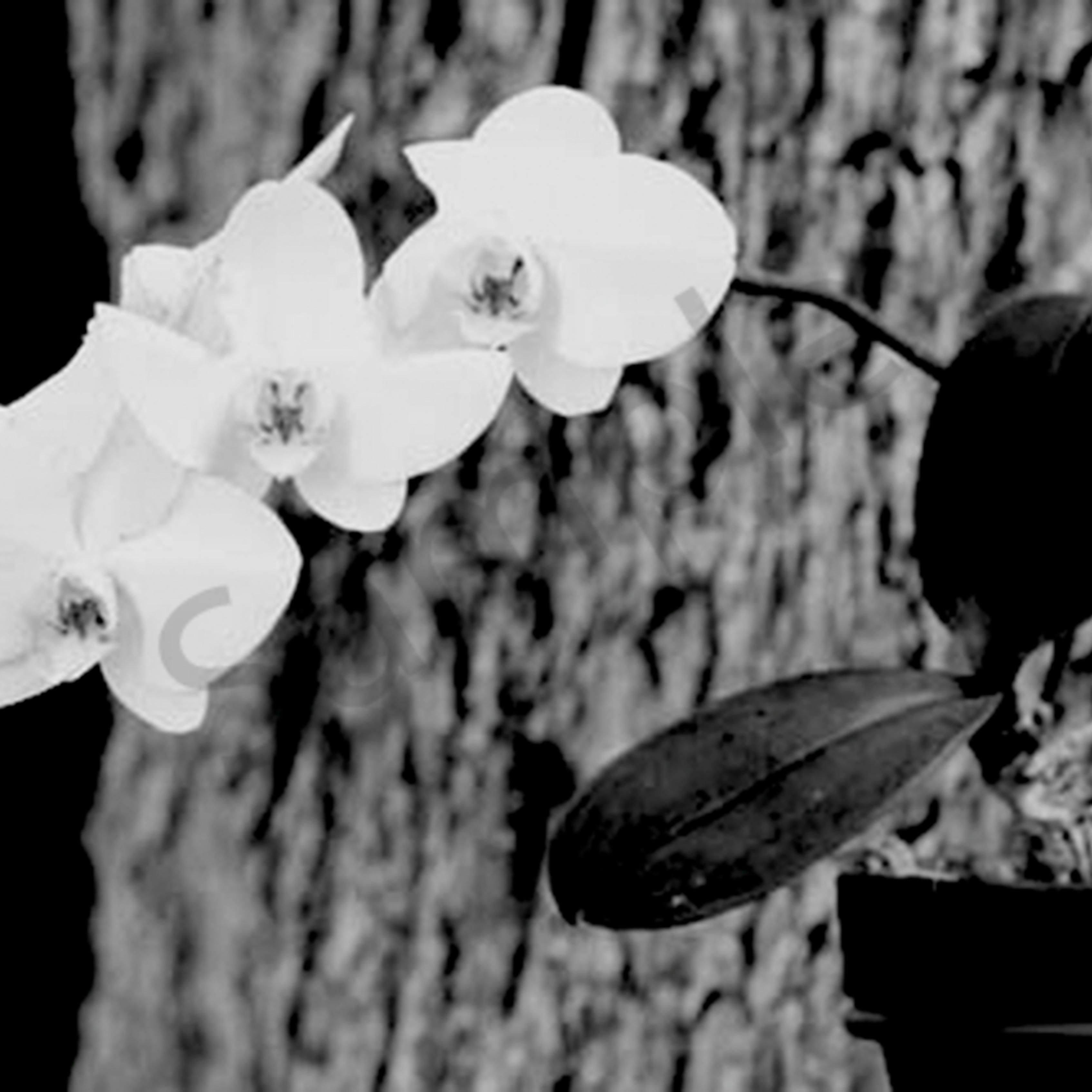 Orchid2 fnvupm