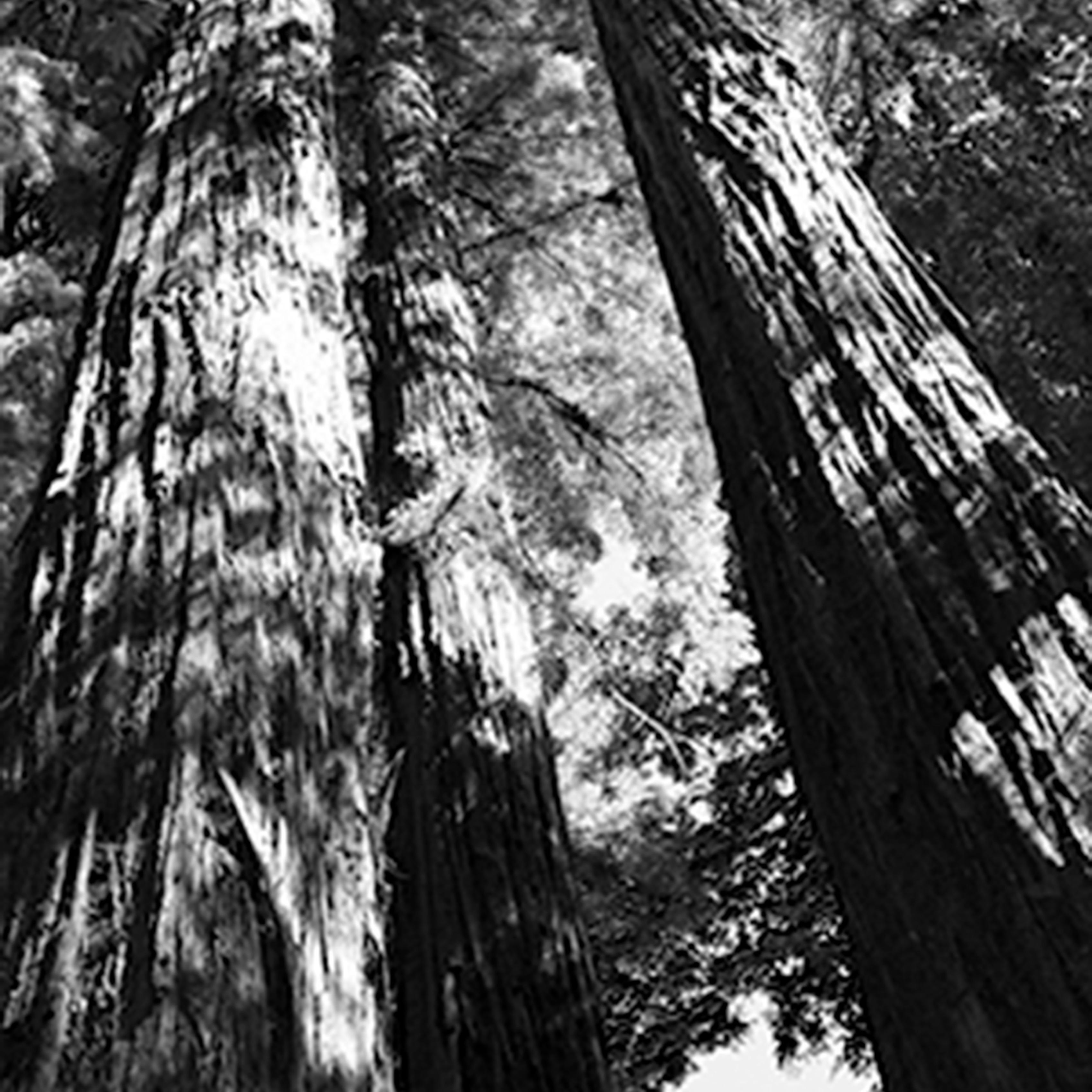 Redwood1 qexzek