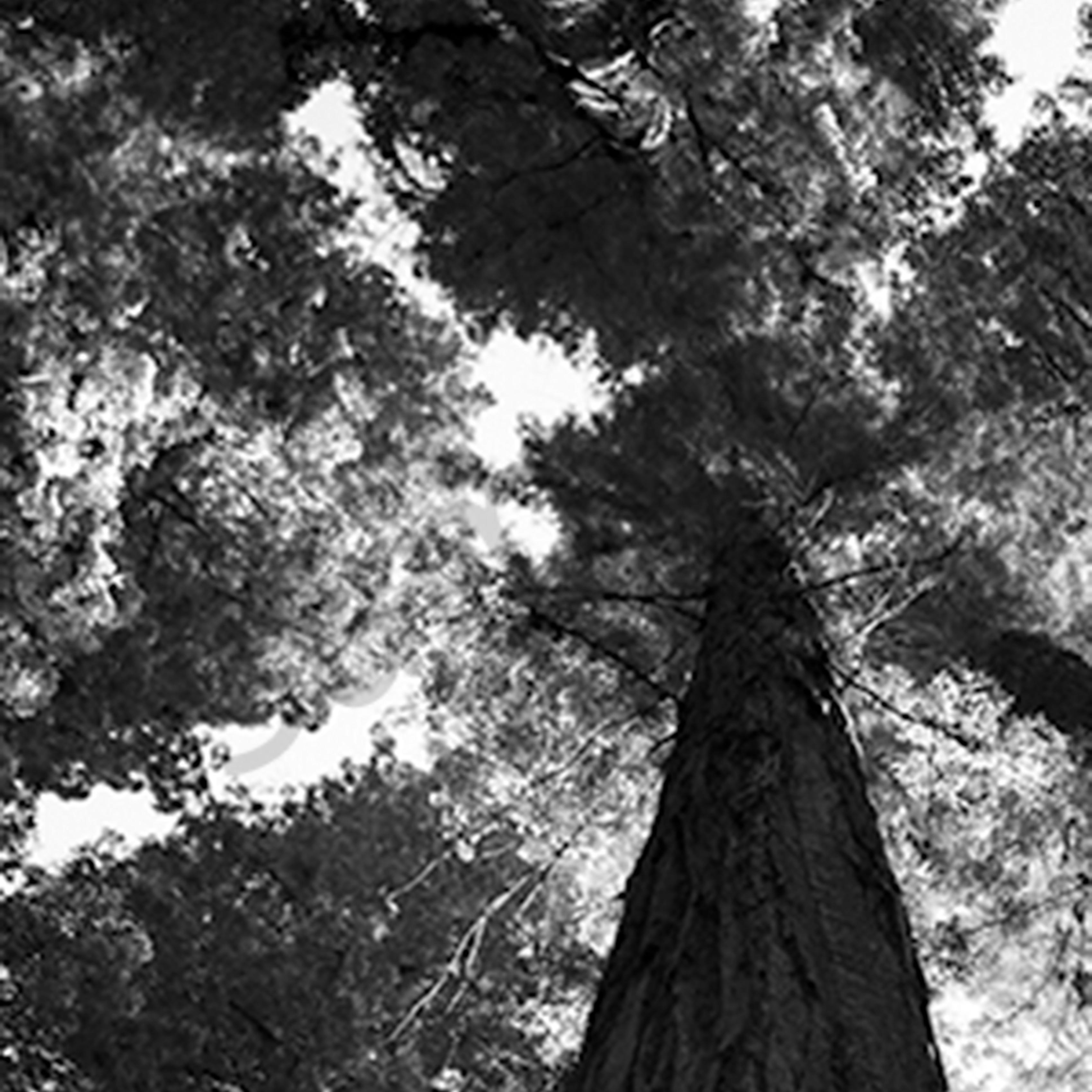 Redwood2 papgvu