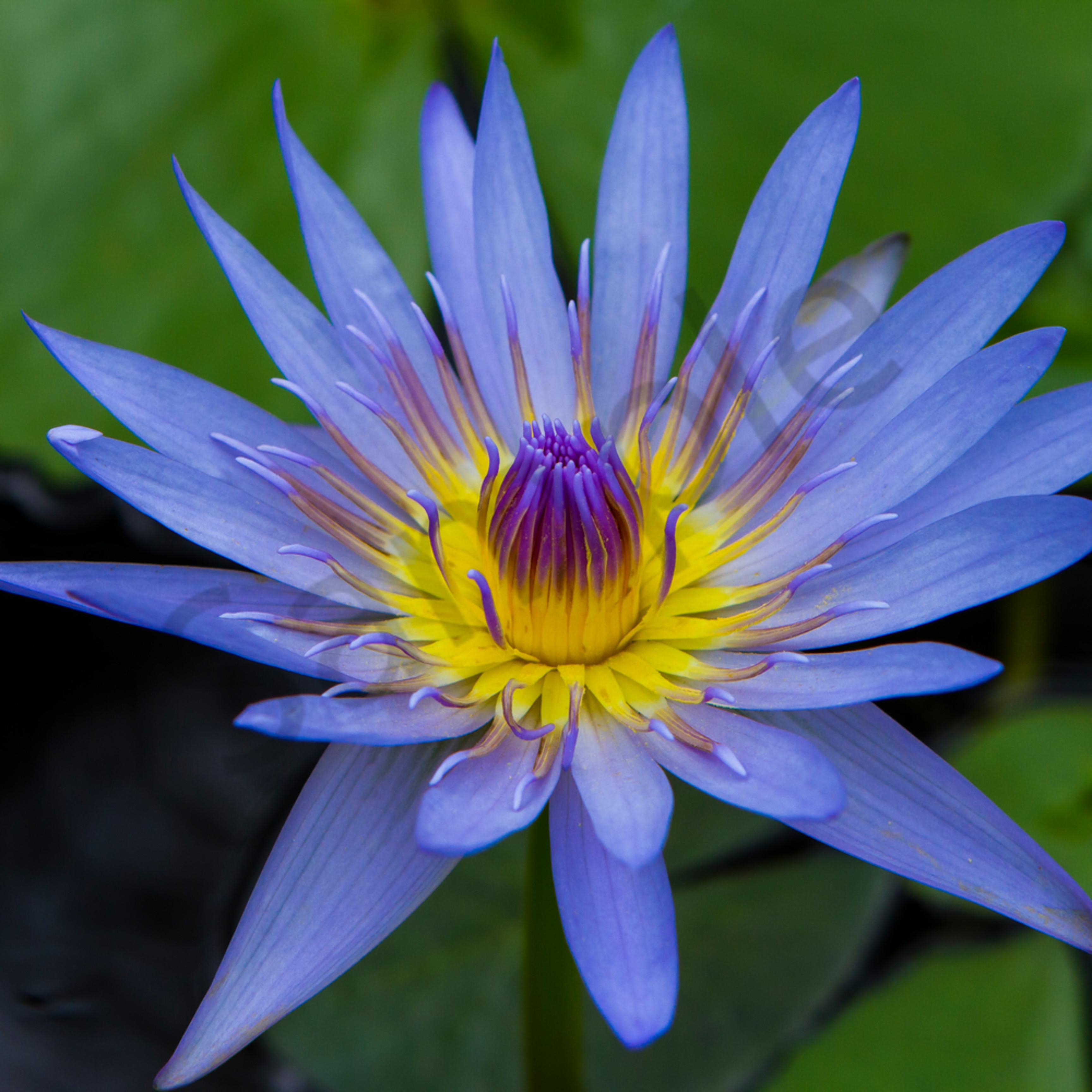 Lotus 3 ww009 ymj6lv