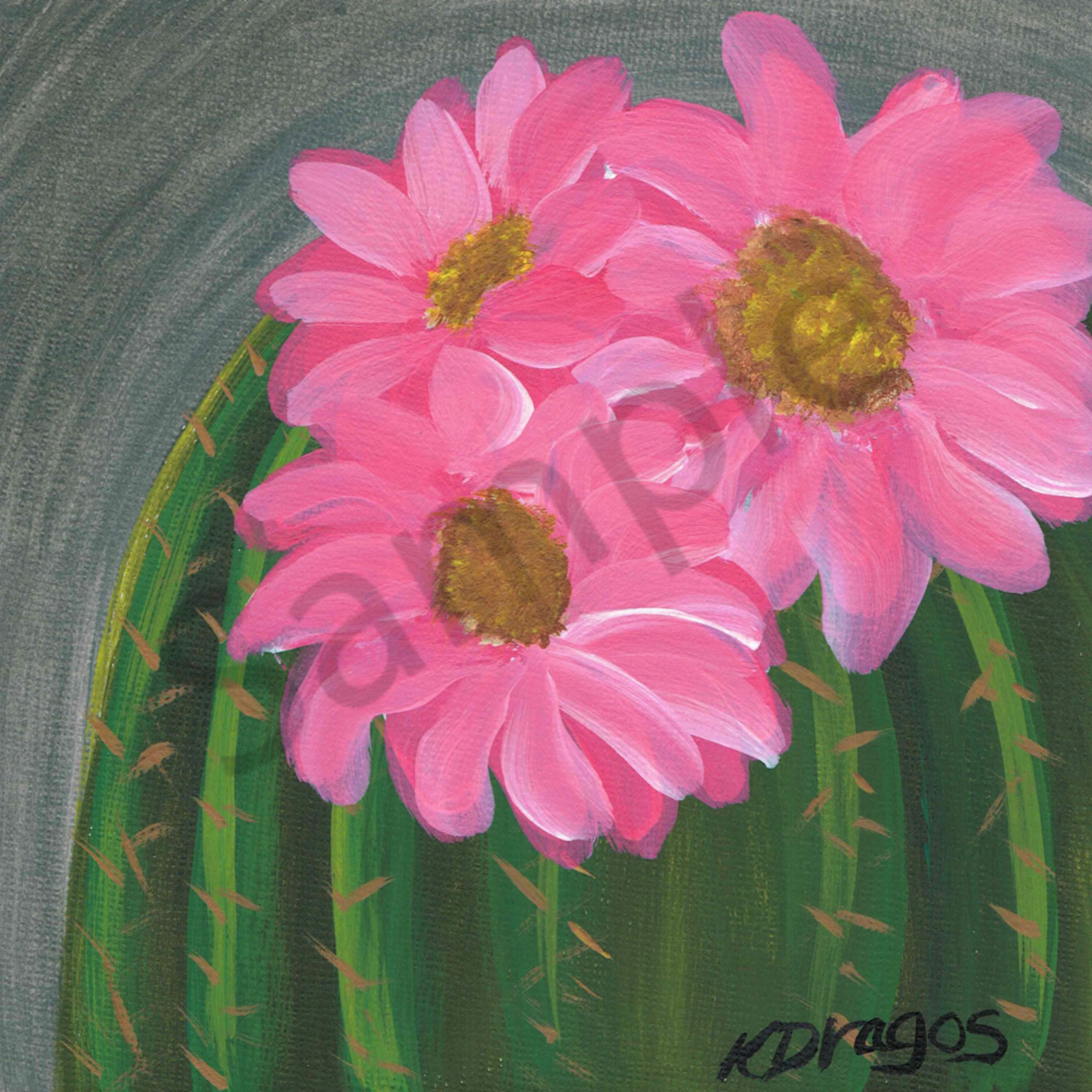 Floweringcactus qodthr