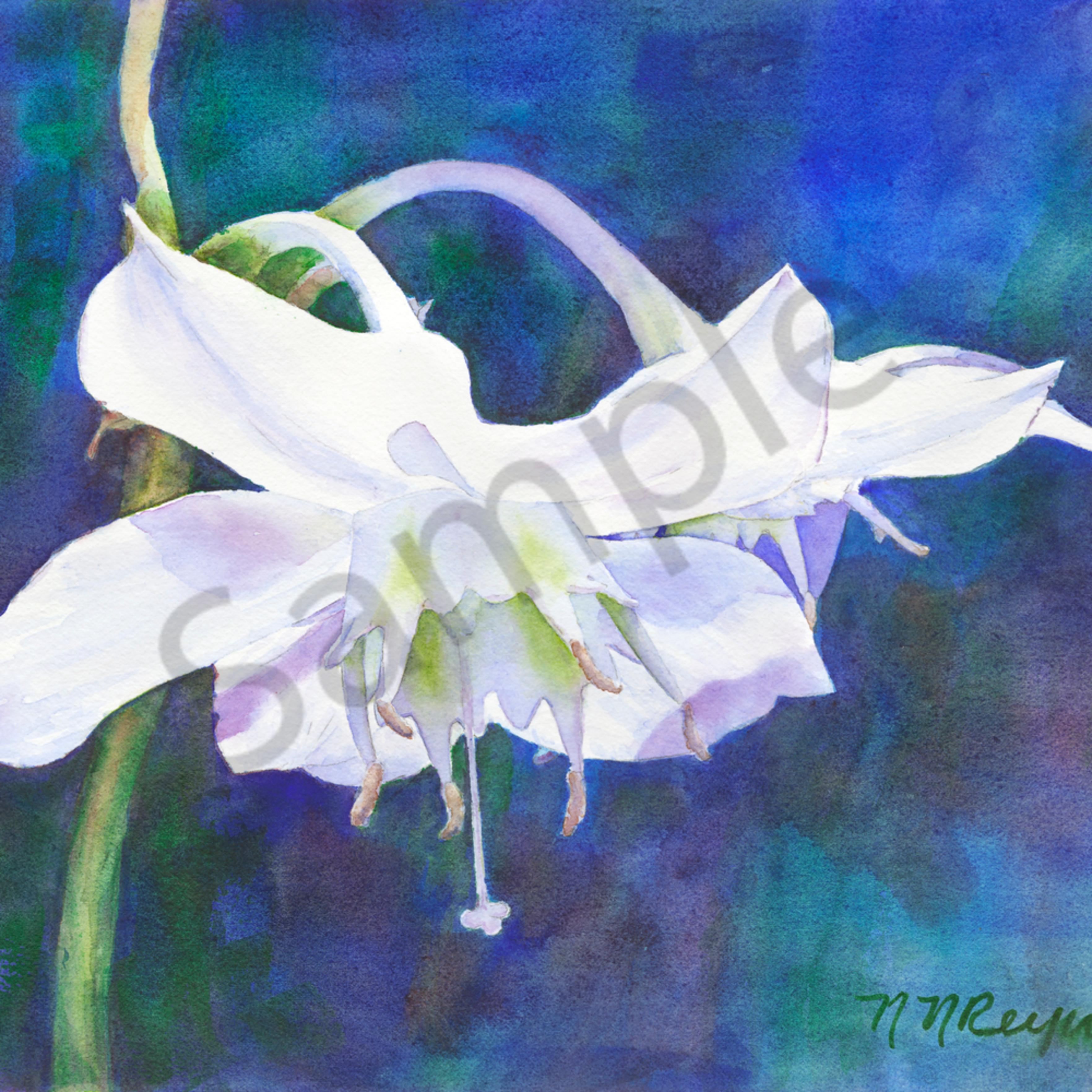 Lily grokfl