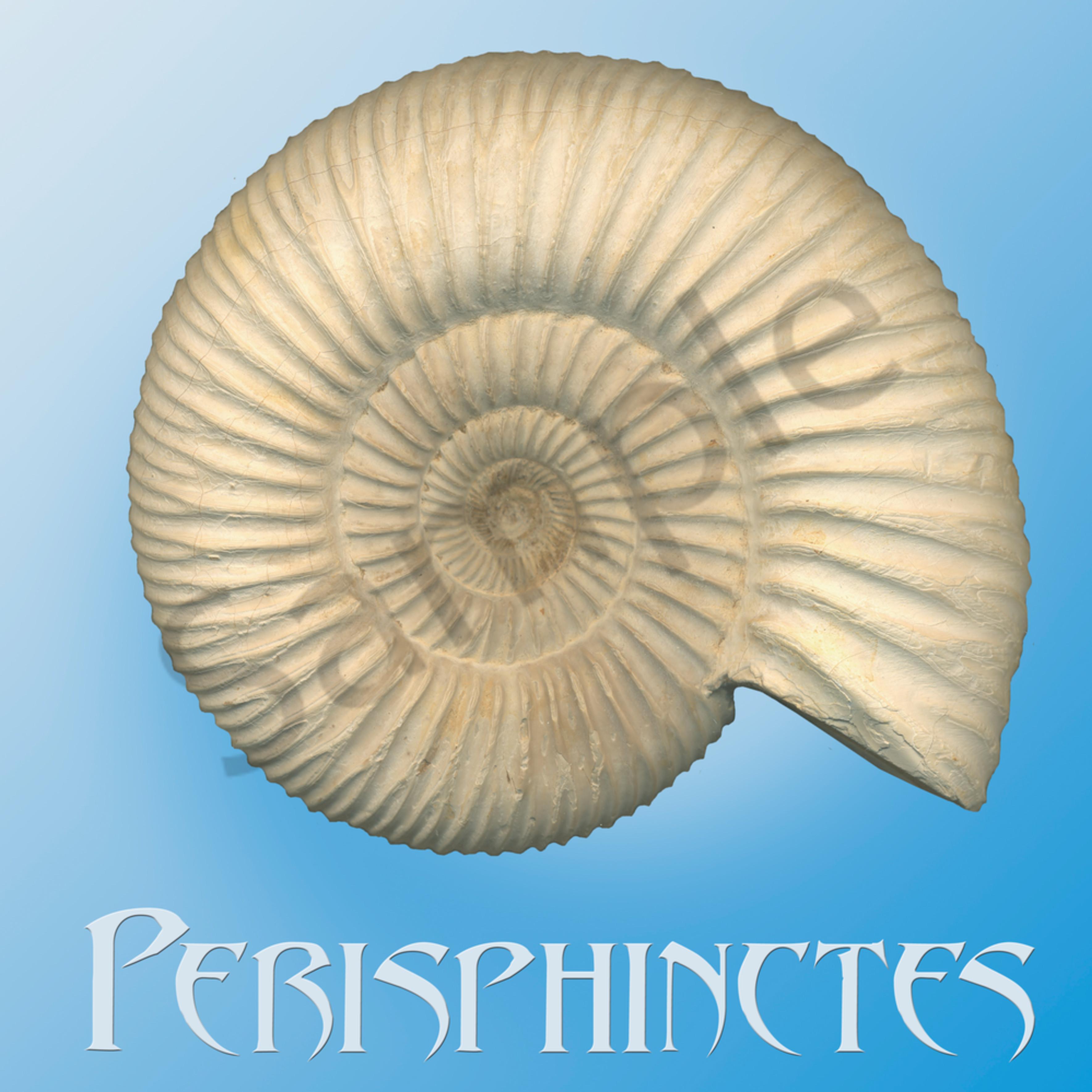 Perisphinctes amonite lz8nco