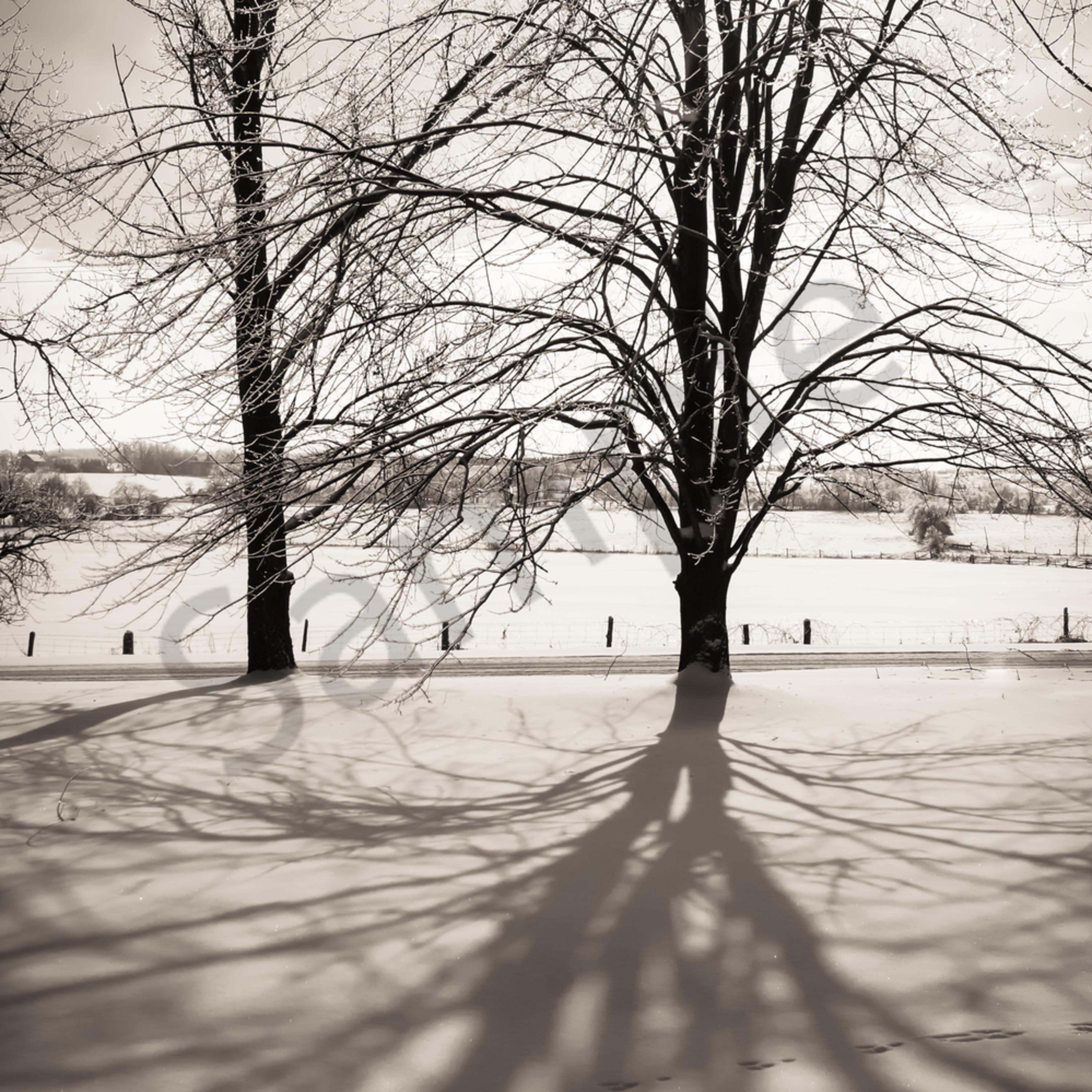 Winter maple cnjcsv