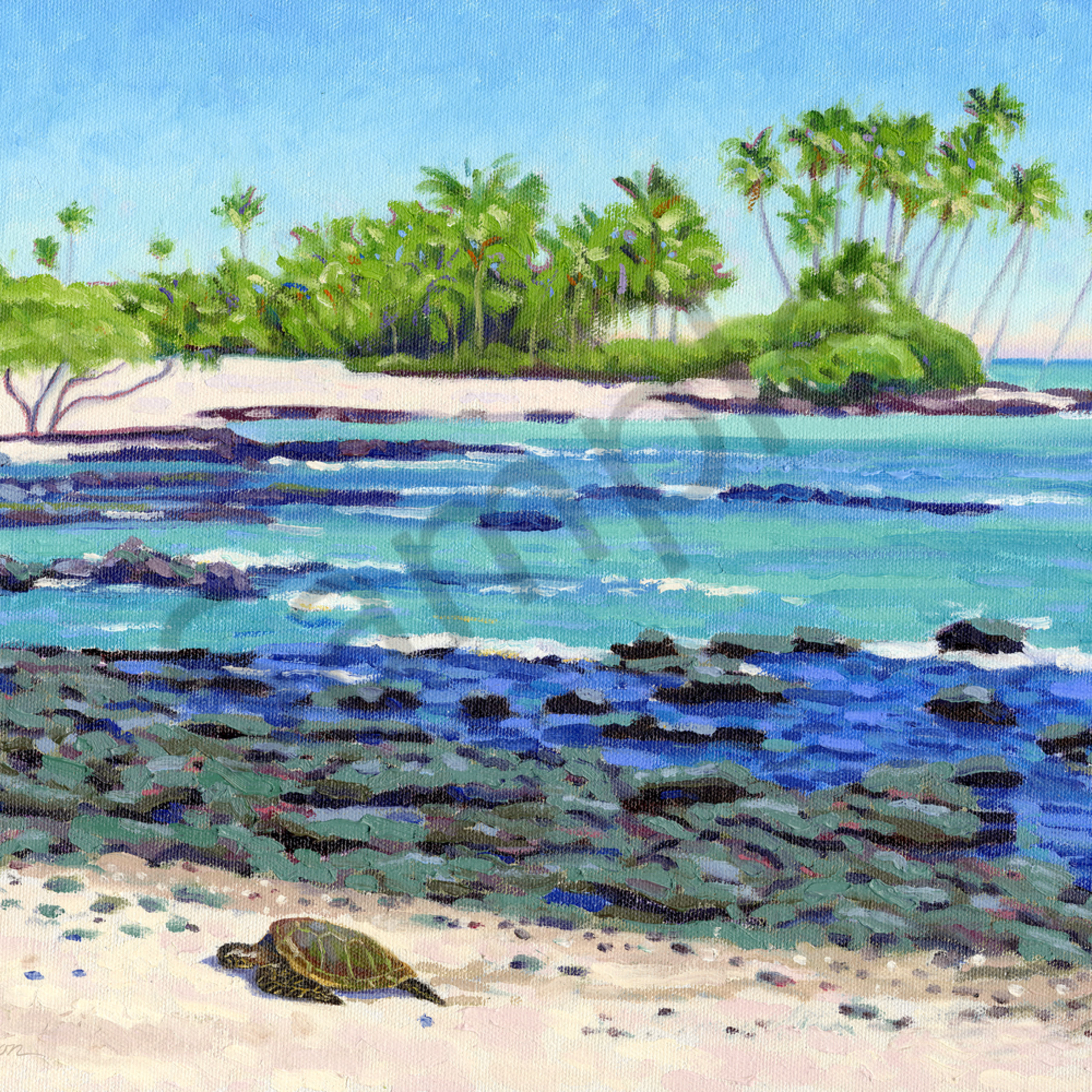 Orchid beach turtle dcbrmp