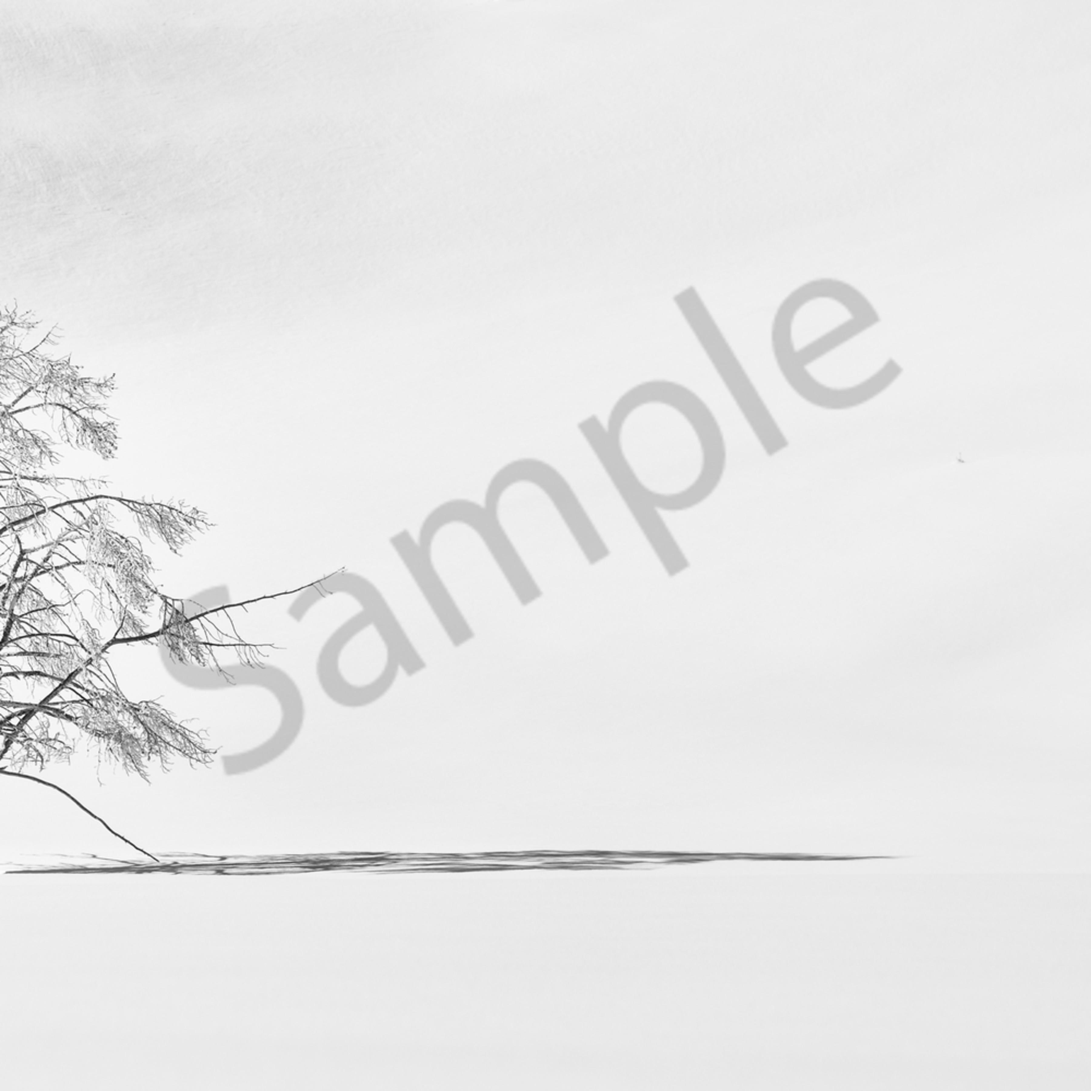 1 dsc 9266 lonesome tree 12x24 no landscape k461oj