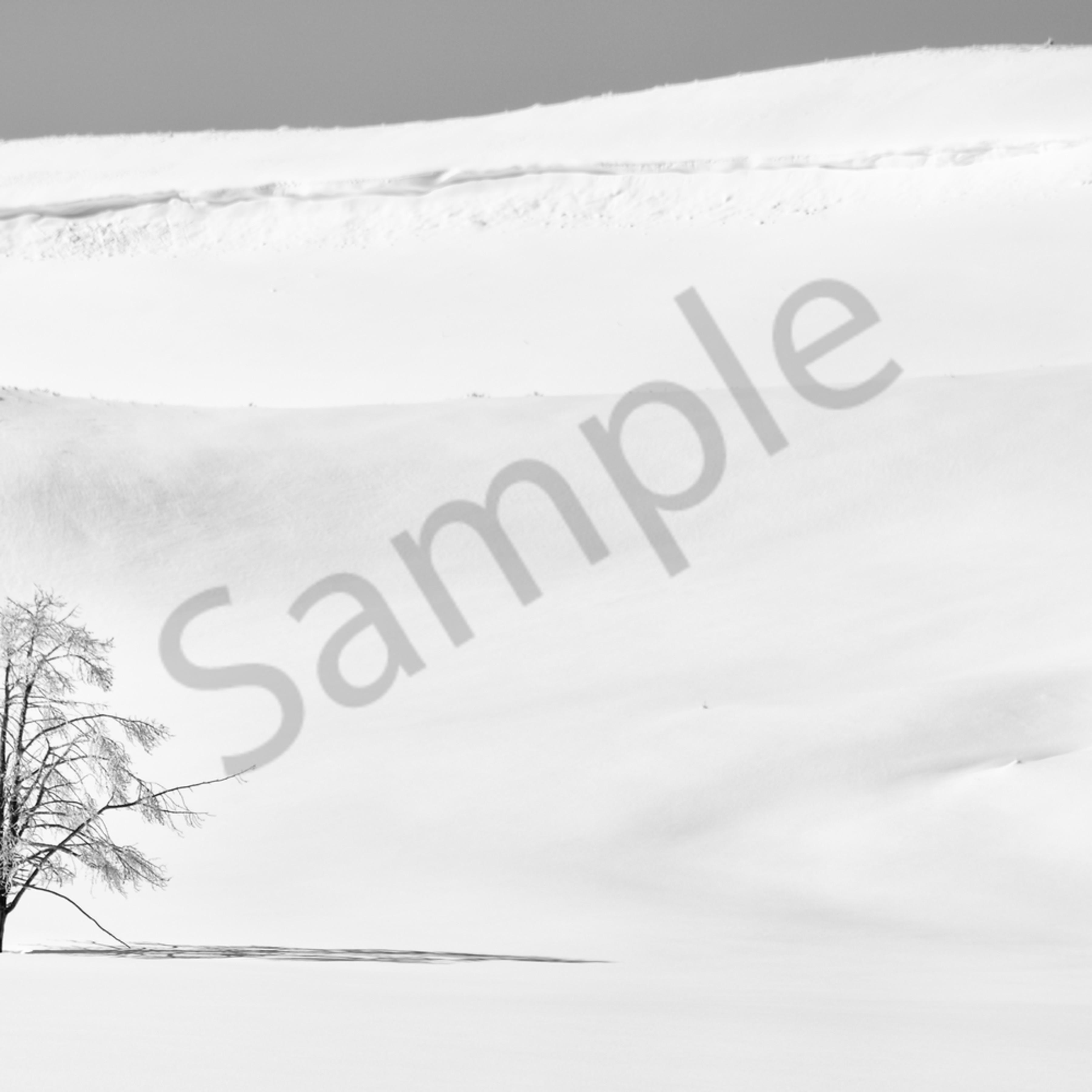 2 dsc 9212 lonesome tree 12x24 crop bw top blur pv2rj9