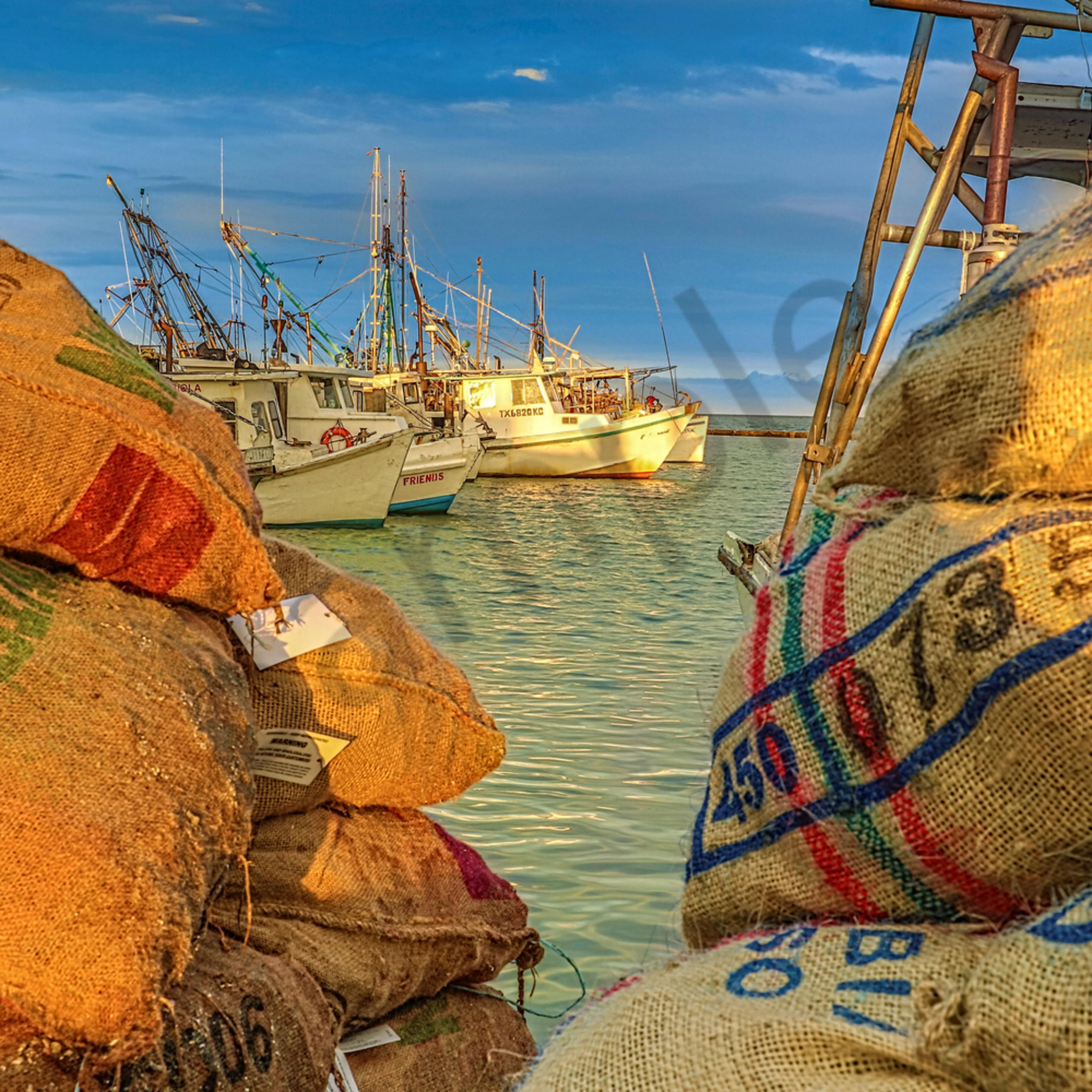 Oyster gold k9uk0u