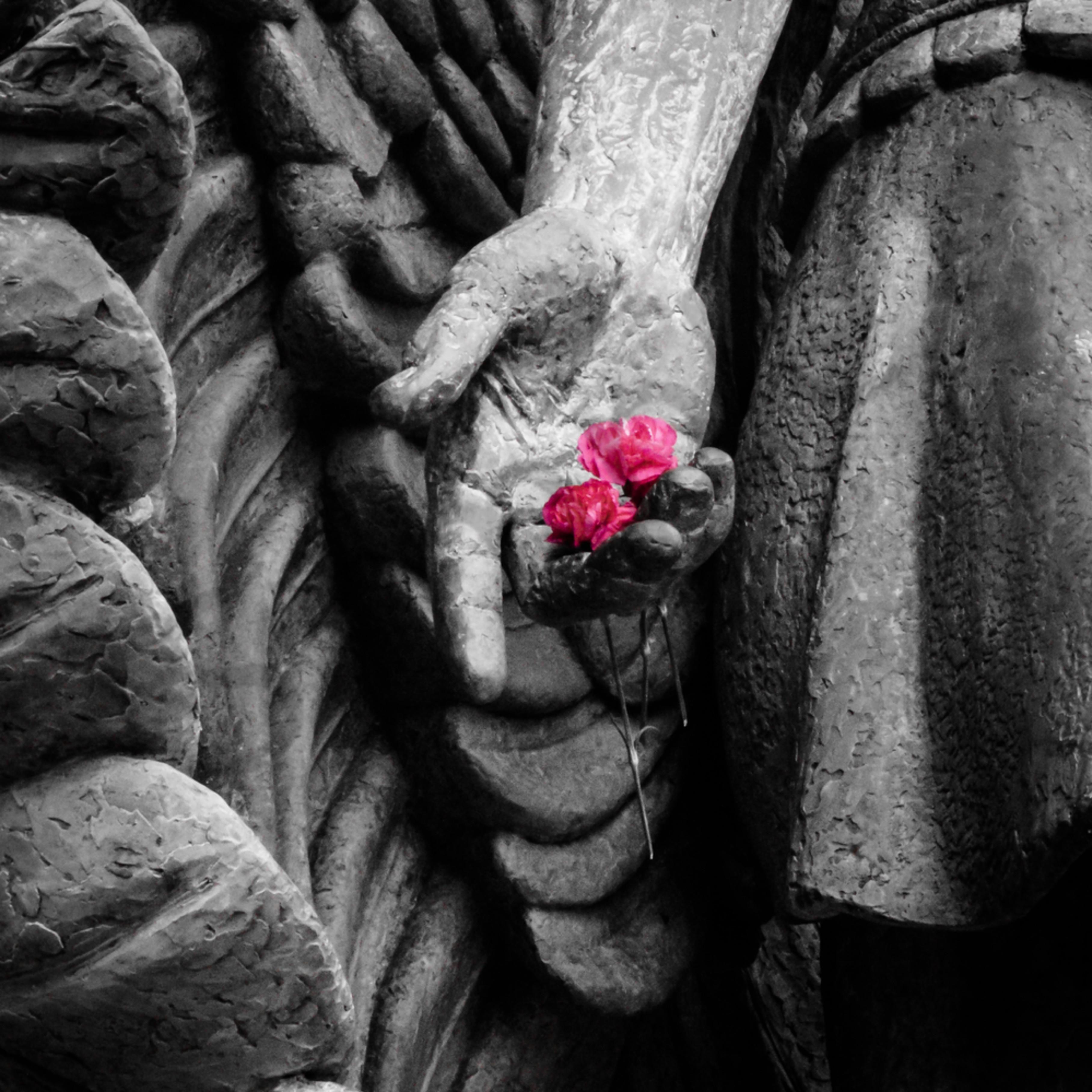 Pink carnations gfv7ho