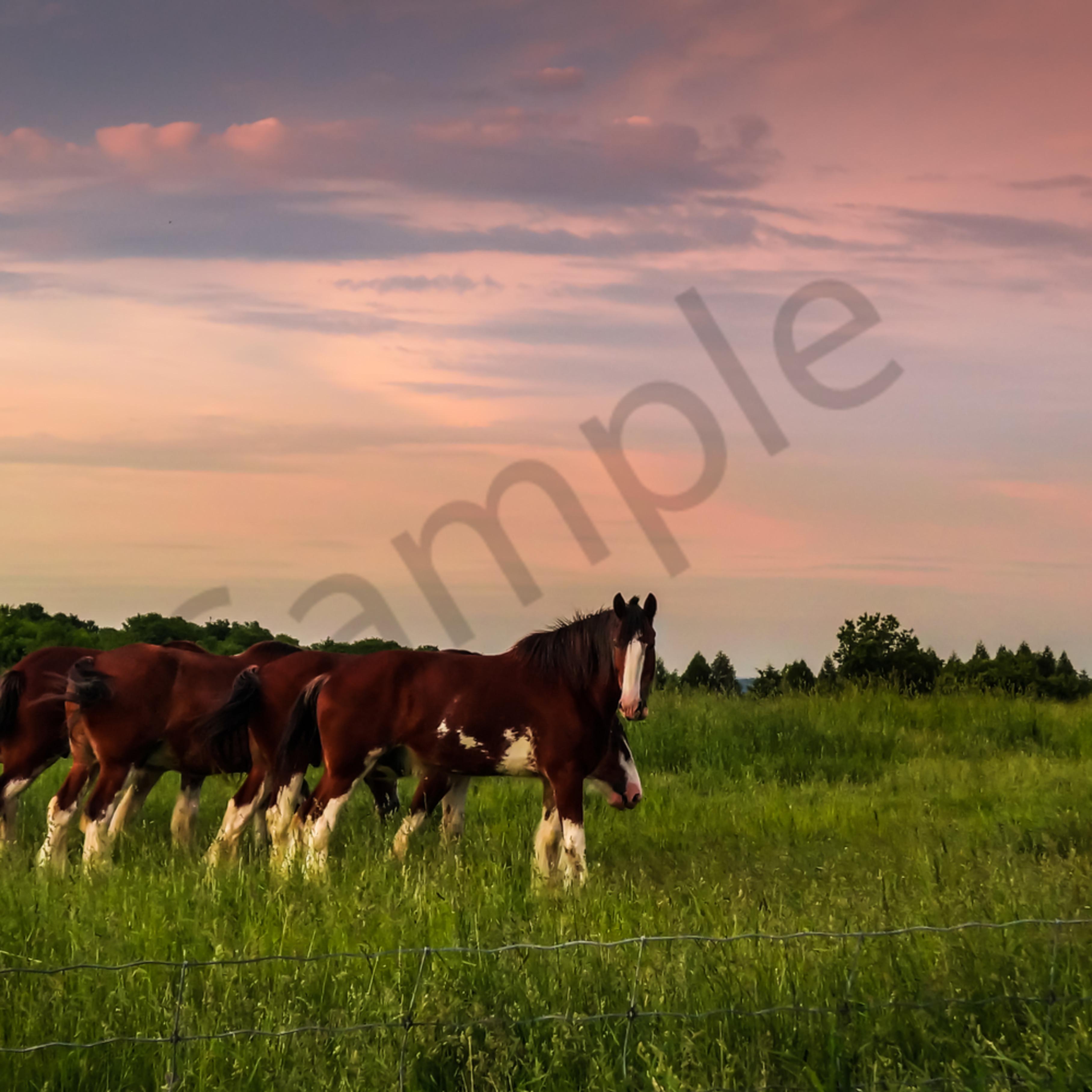 Sunset horses vtrpcd