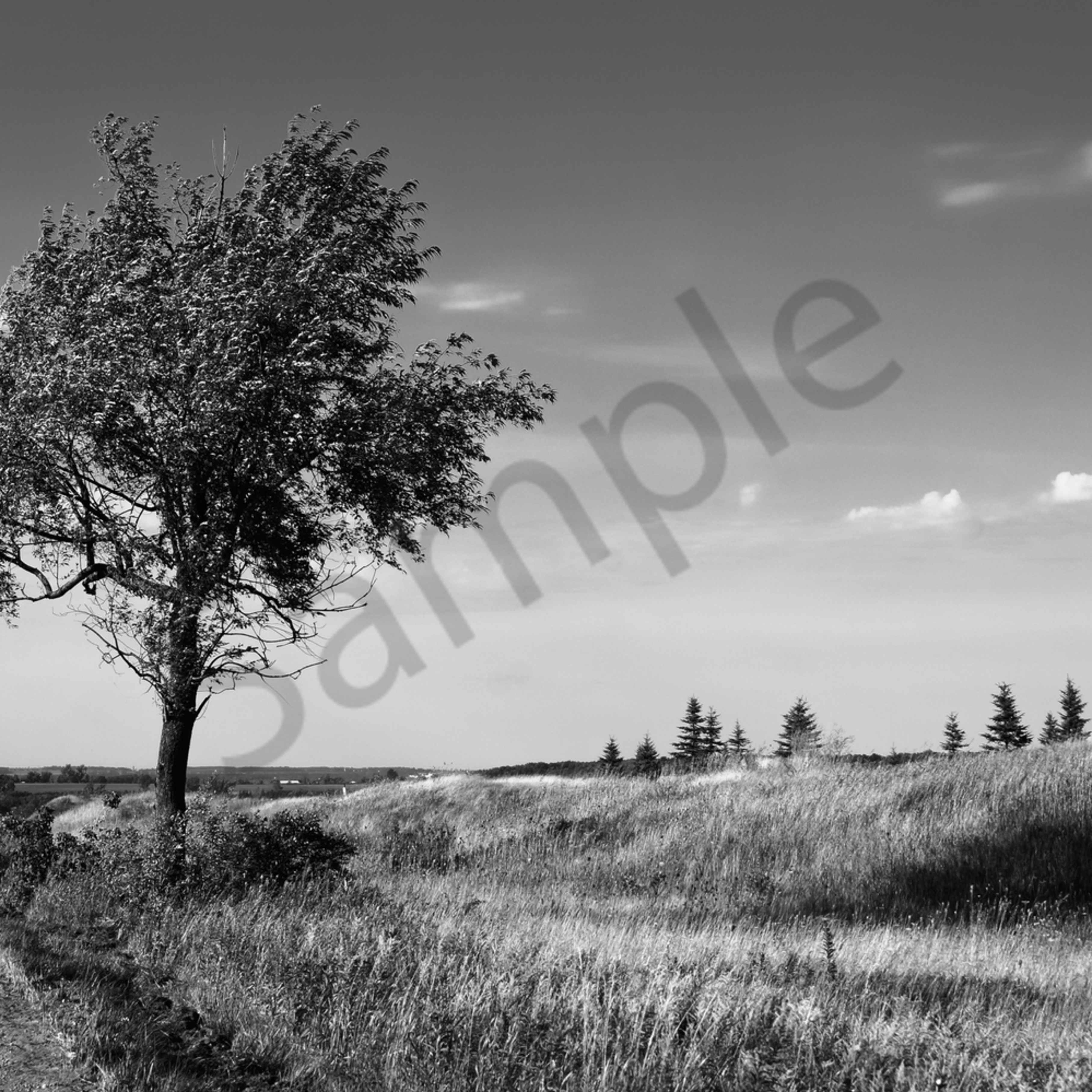 Lonely country tree mgfllu