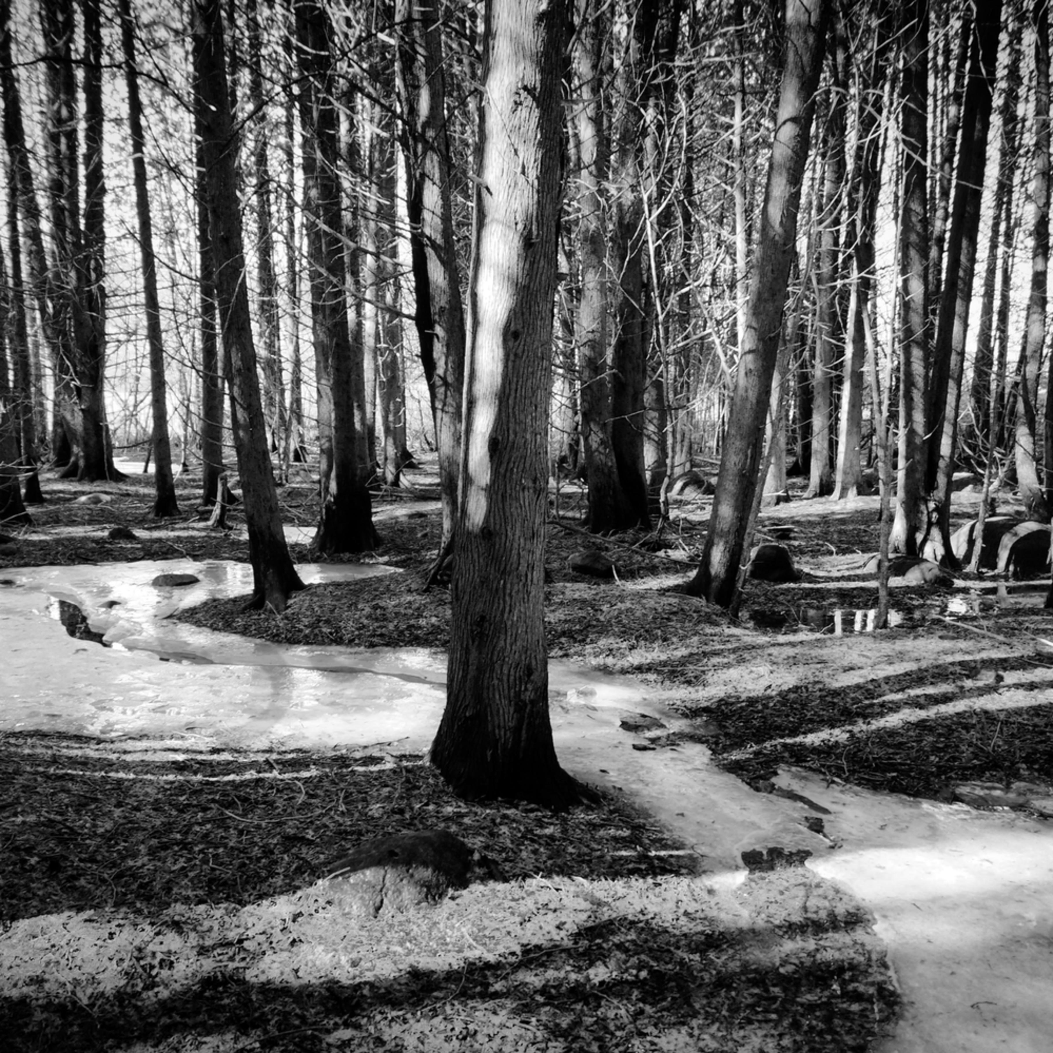 Woodland snow river d6krfx