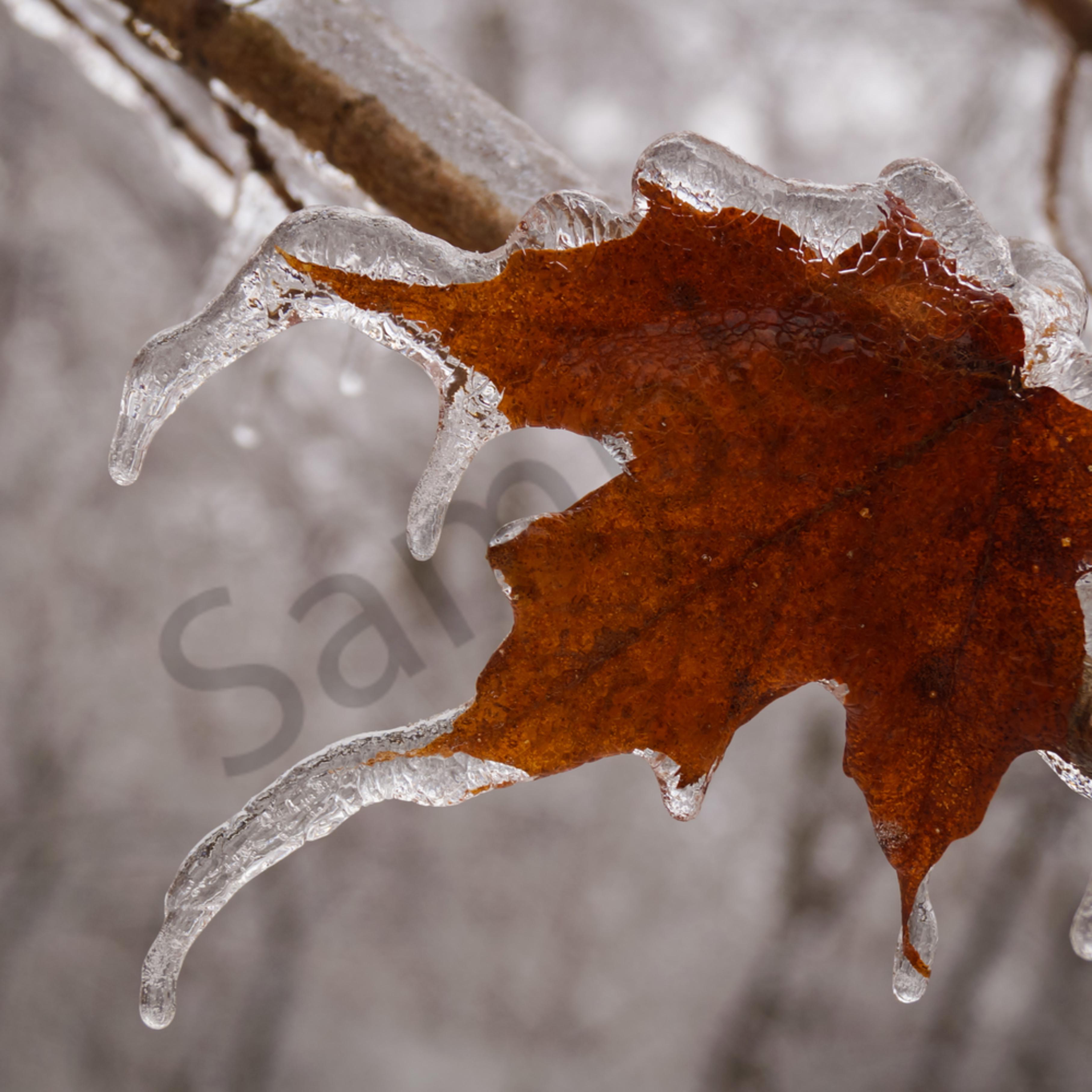Frozen rg421u