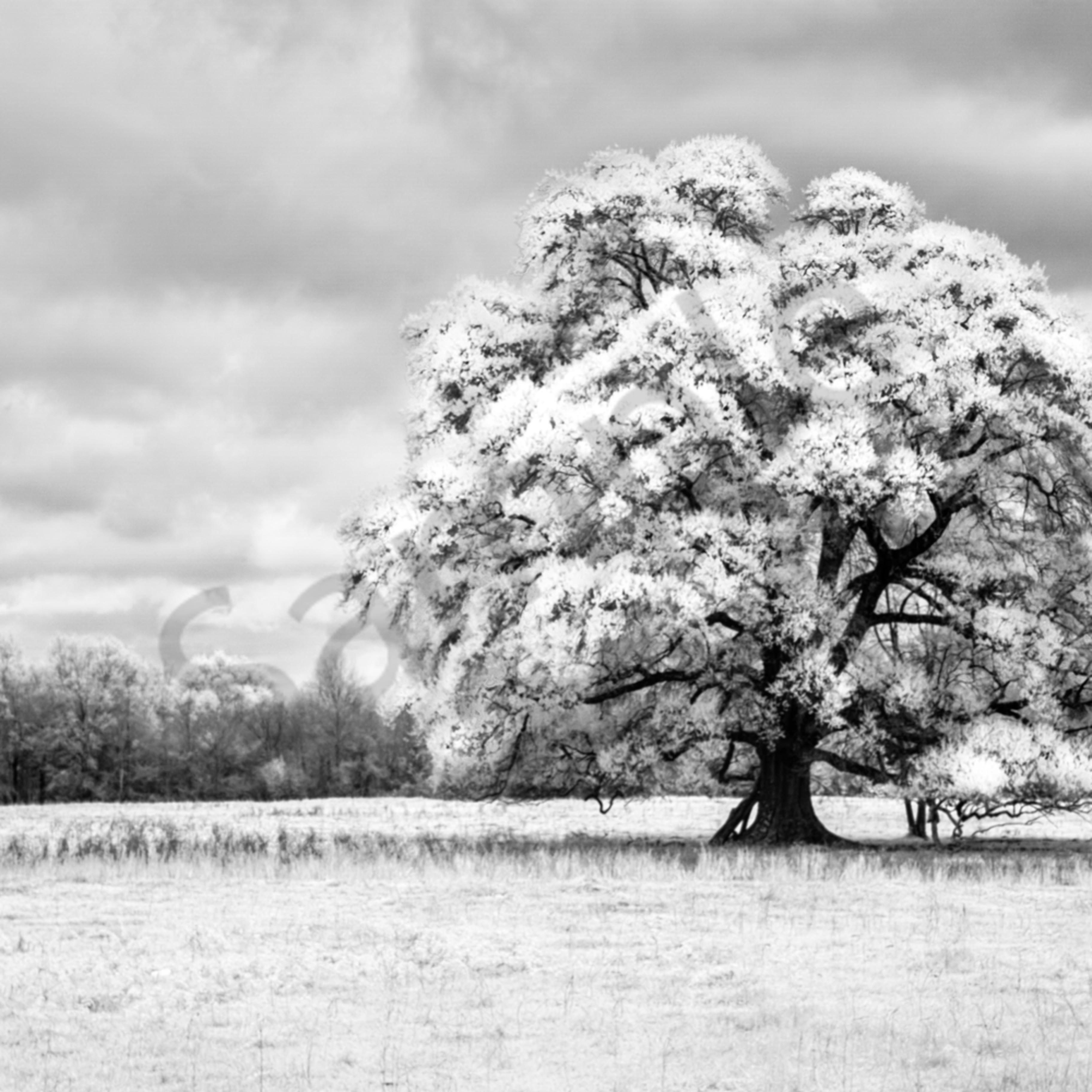 Oaks of righteousness by harold vincent qtkqsr