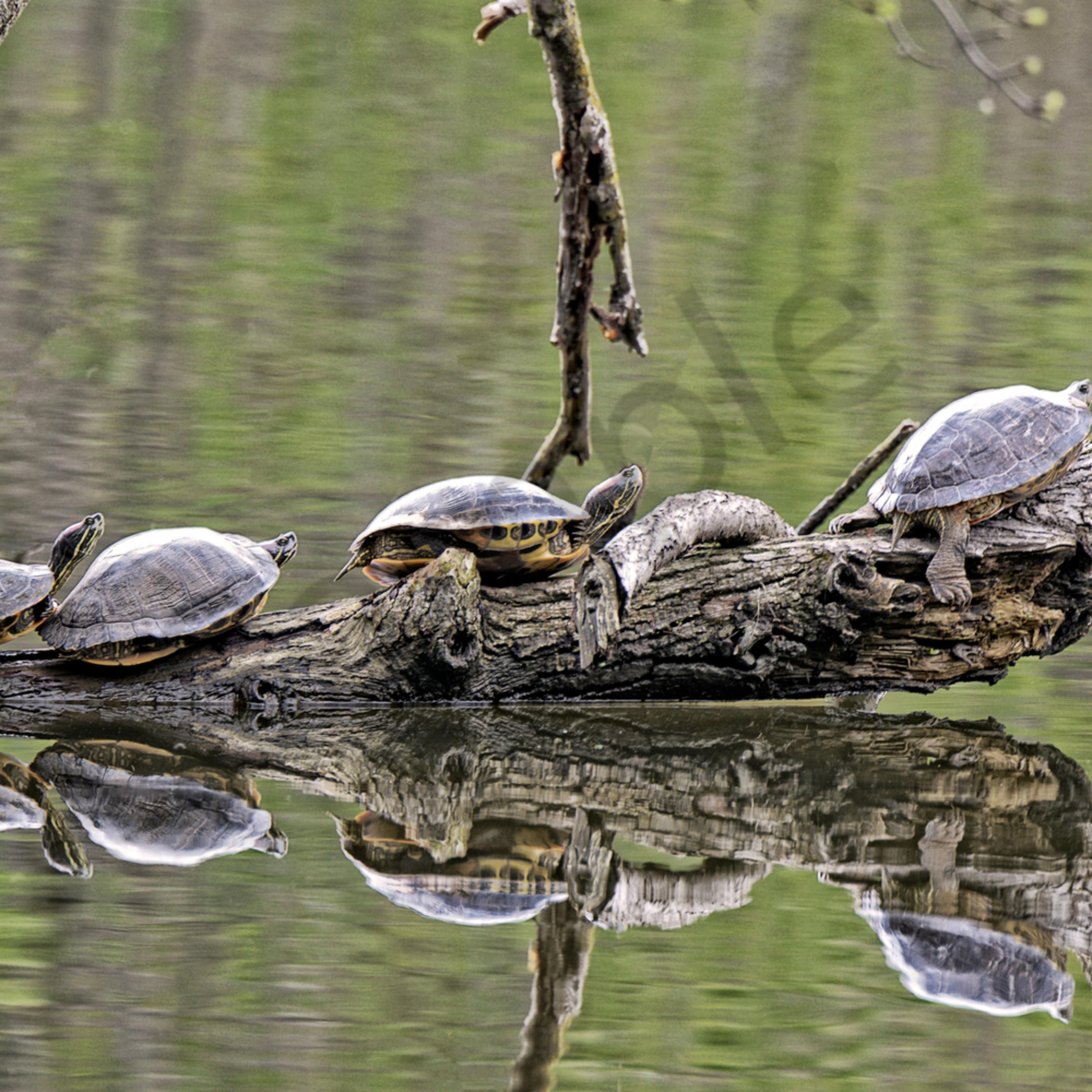 Turtle follow leader 1 of 1 pylqpn