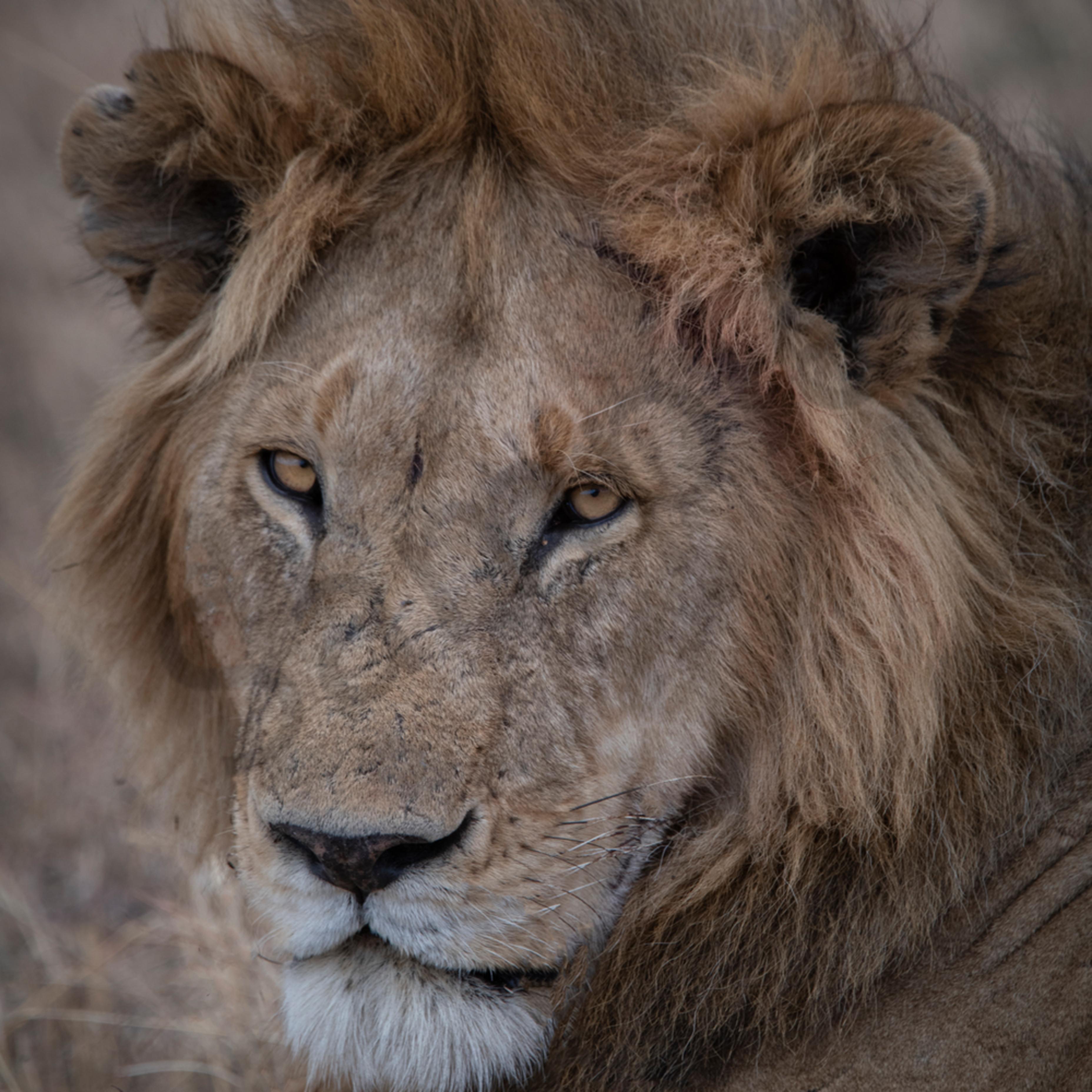 Jps lion 5 qh5toj